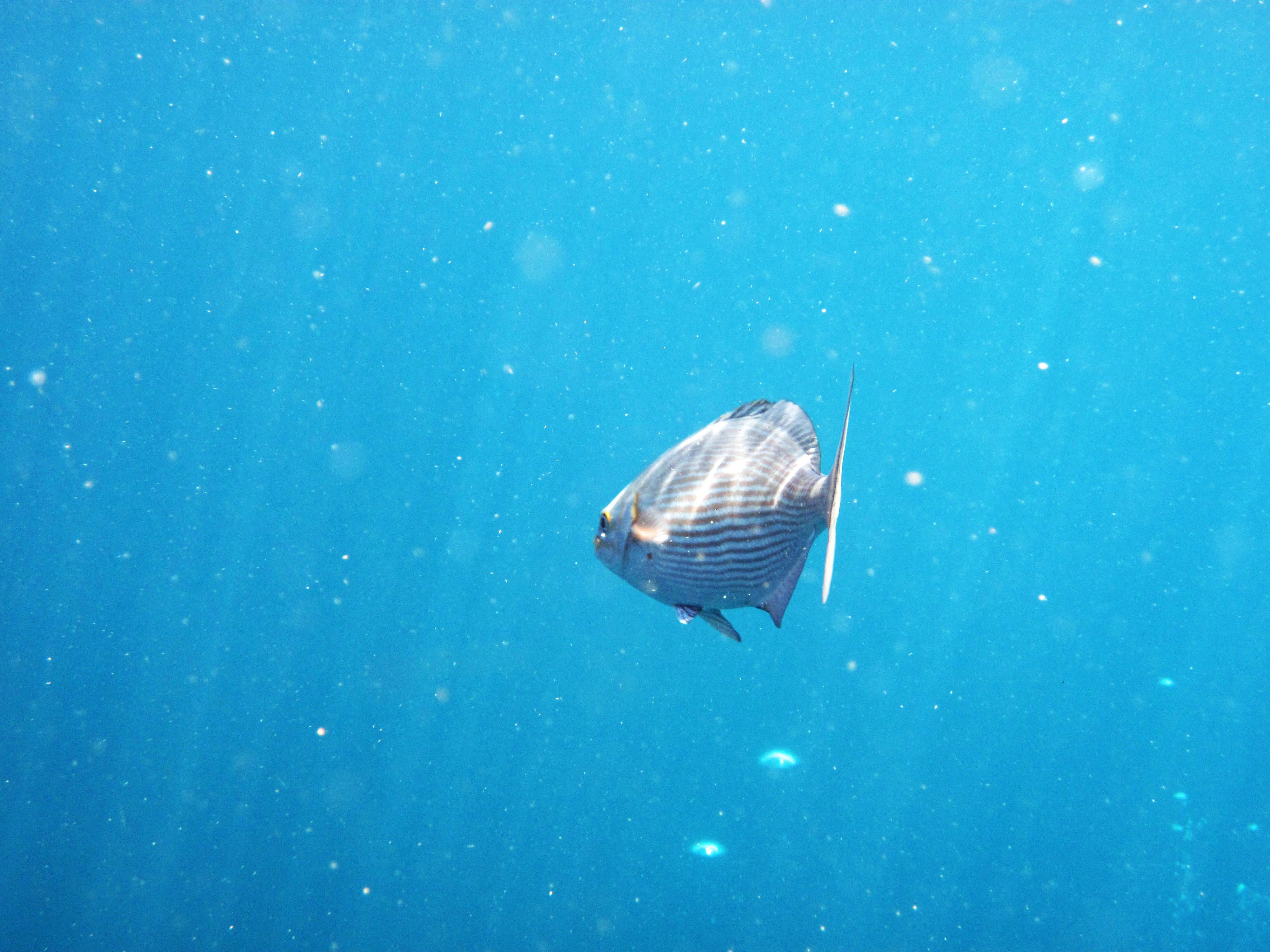Hình ảnh đại Dương Dưới Nước Sinh Học Màu Xanh Da Trời