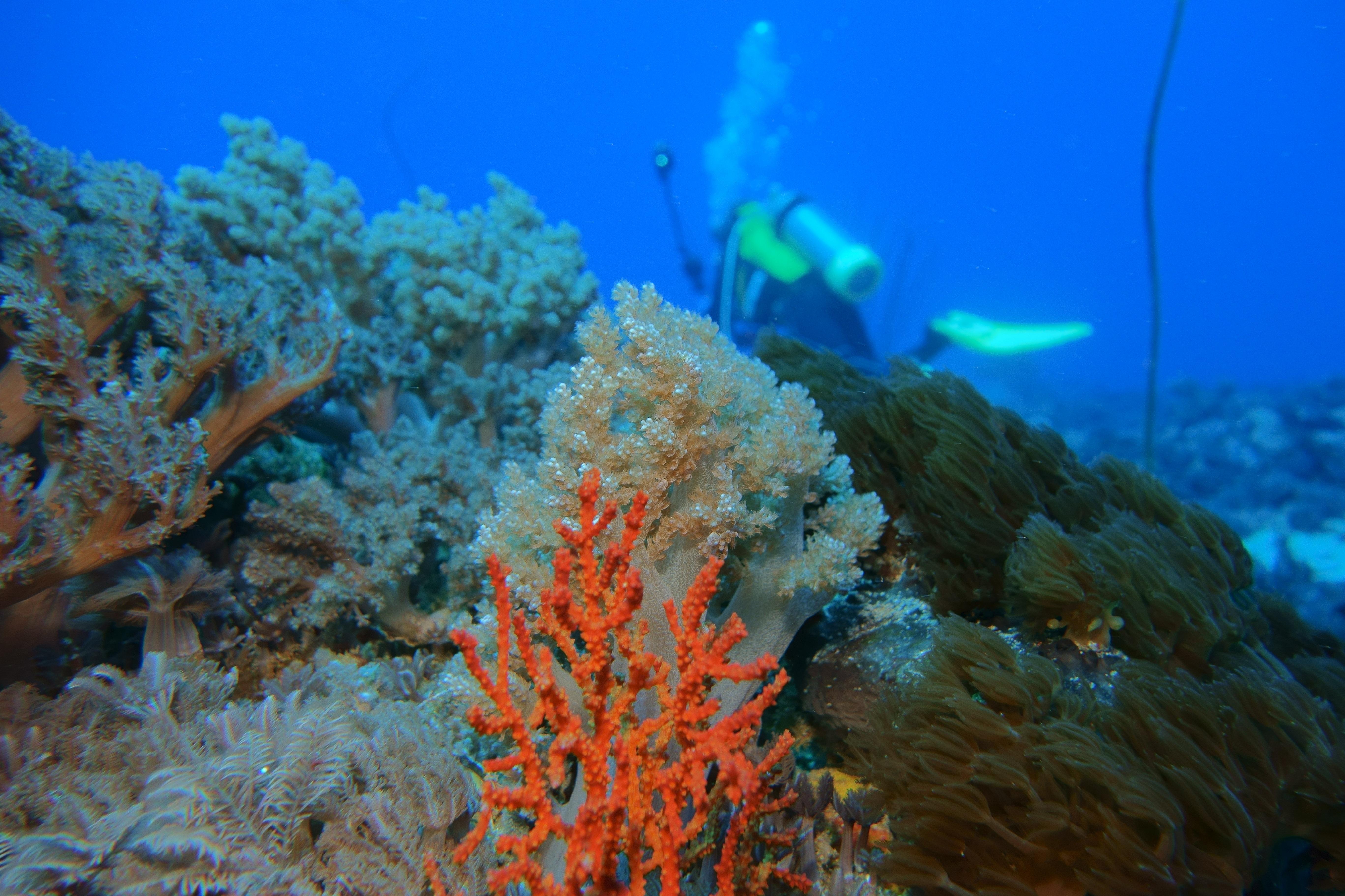 Gambar Laut Lautan Bawah Air Batu Karang Invertebrata Taiwan Habitat Terumbu Taitung Pulau Hijau Lingkungan Alami Biologi Kelautan Ikan Karang 5472x3648 739353 Galeri Foto Pxhere