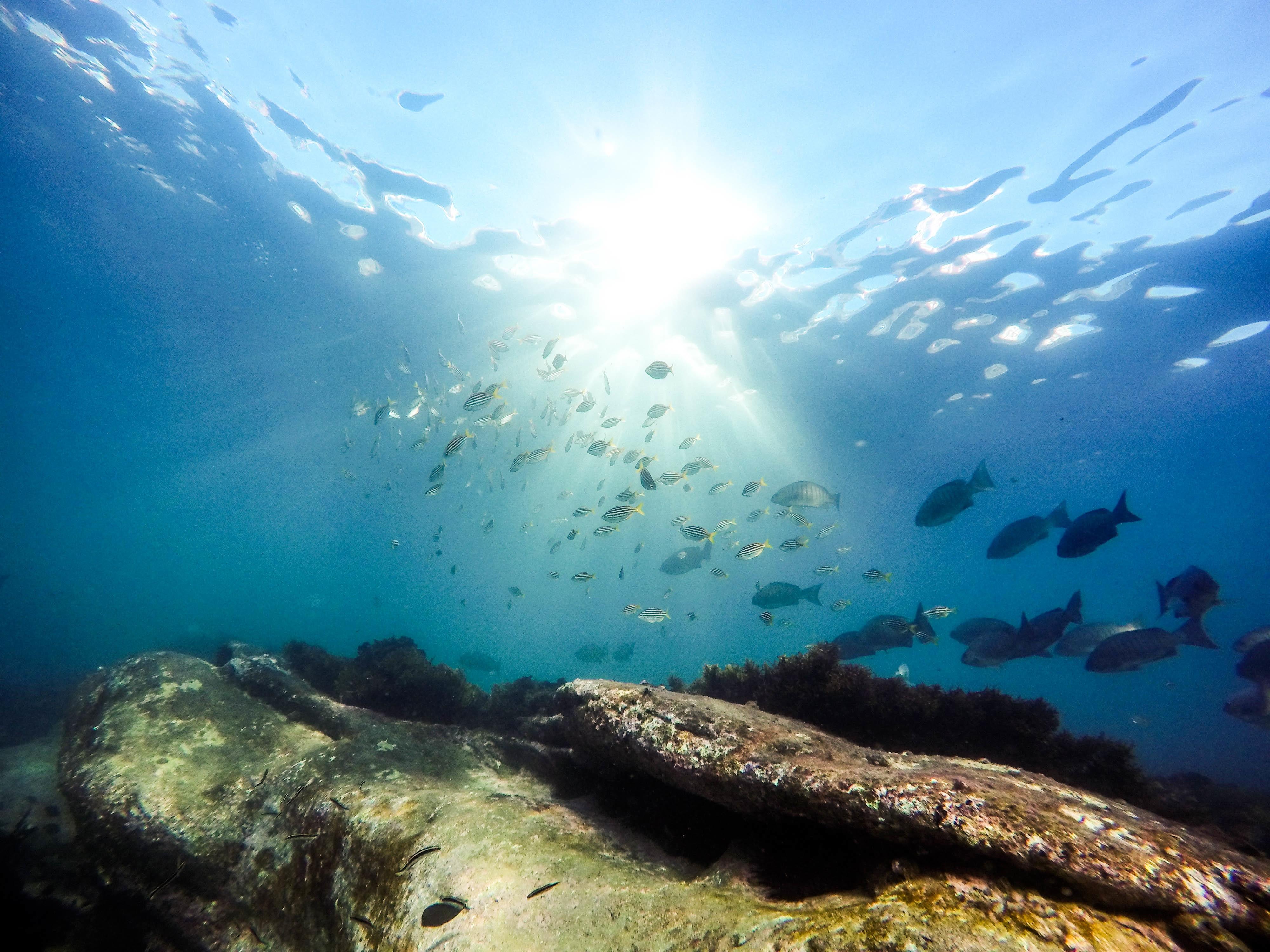 Free Images Sea Ocean Underwater Coral Reef Marine