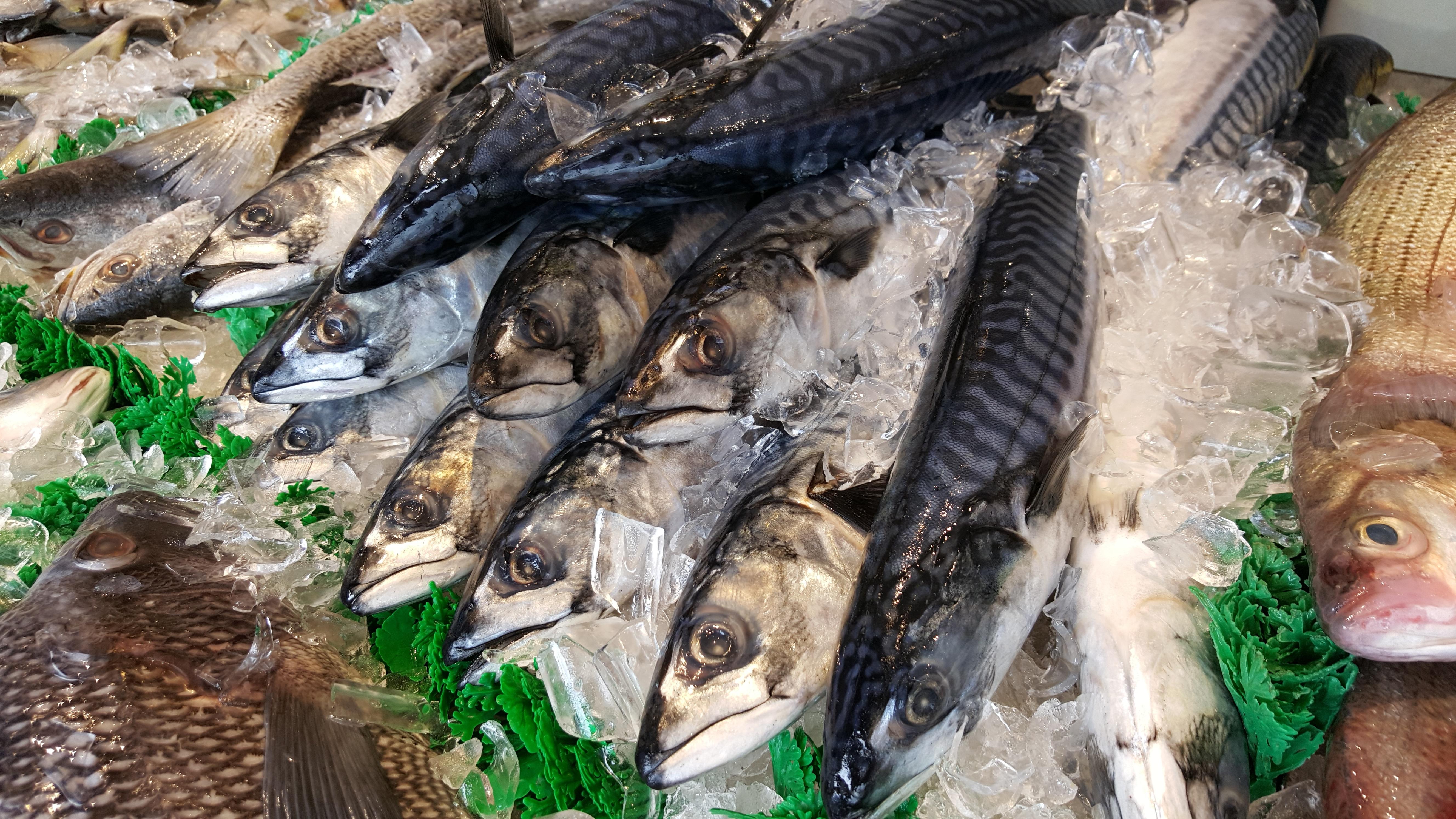 Gambar Lautan Liar Bawah Air Makanan Laut Biru Sirip Ikan