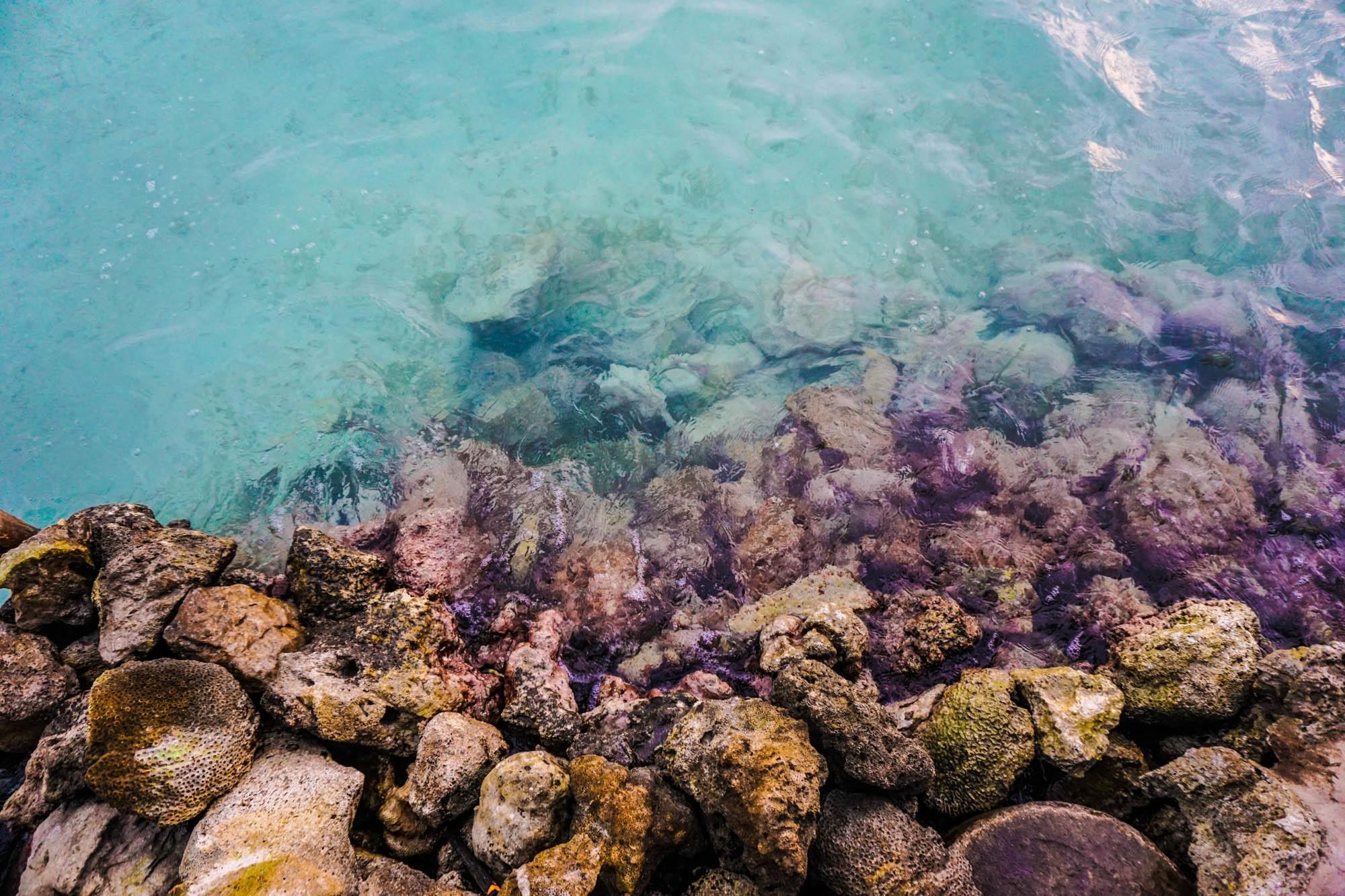 sea rock ocean underwater biology coral coral