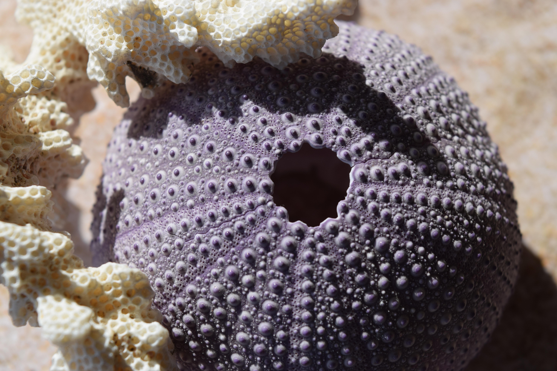 Fotos gratis : arena, patrón, material, coral, invertebrado, tejer ...