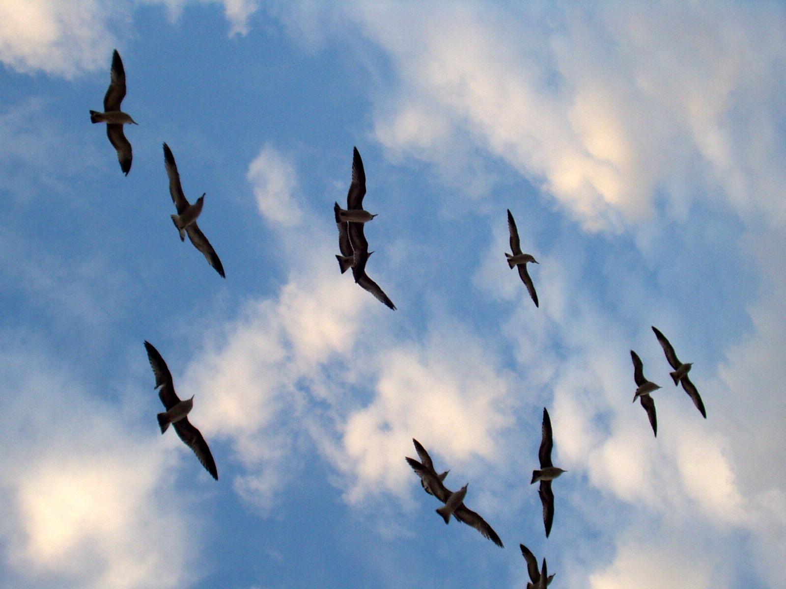 83+ Foto Gambar Burung Siluet  Terbaik