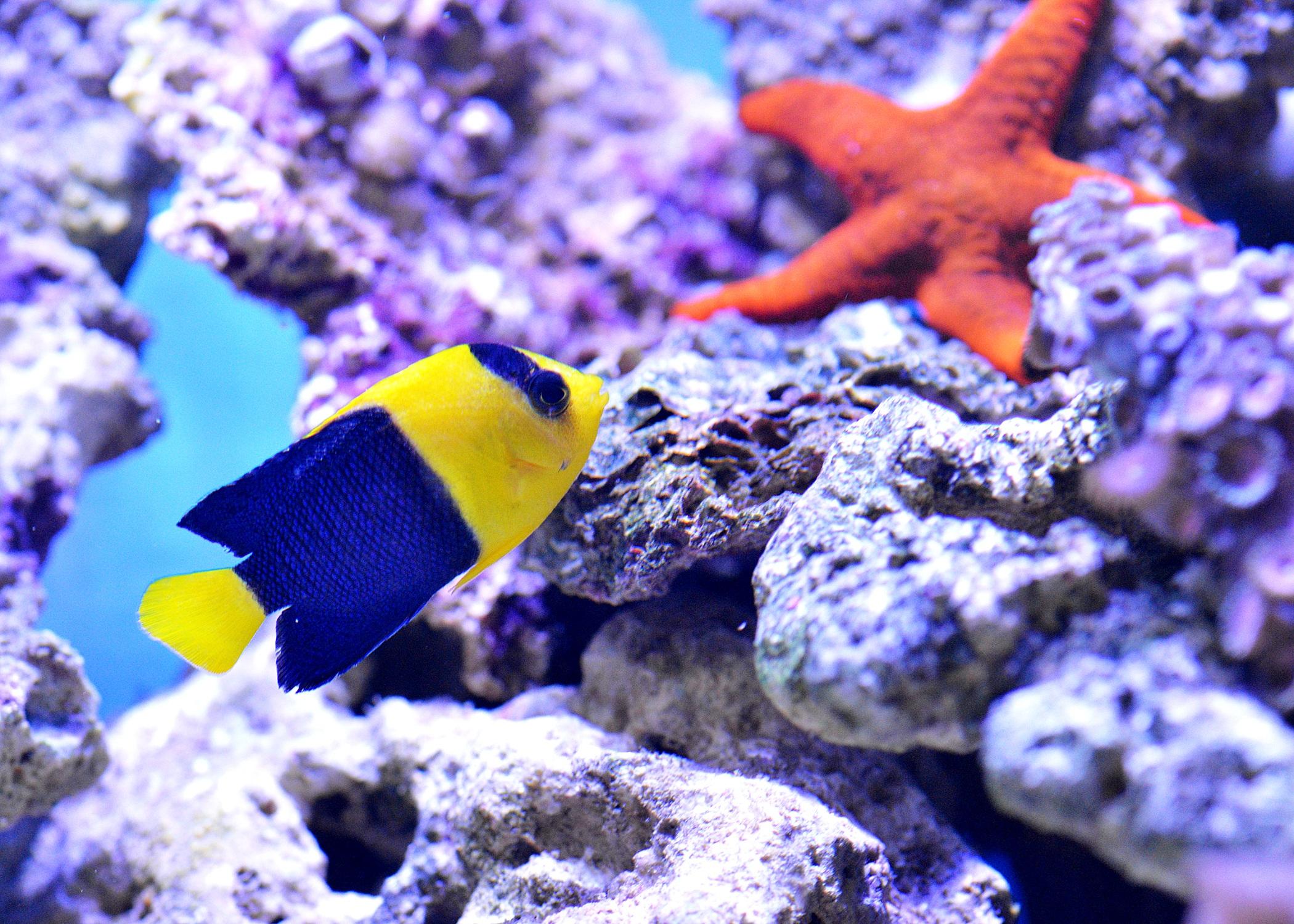 8a3e70cf12e3 sea star underwater biology blue fish fauna starfish coral coral reef  invertebrate reef nemo aquarium macro