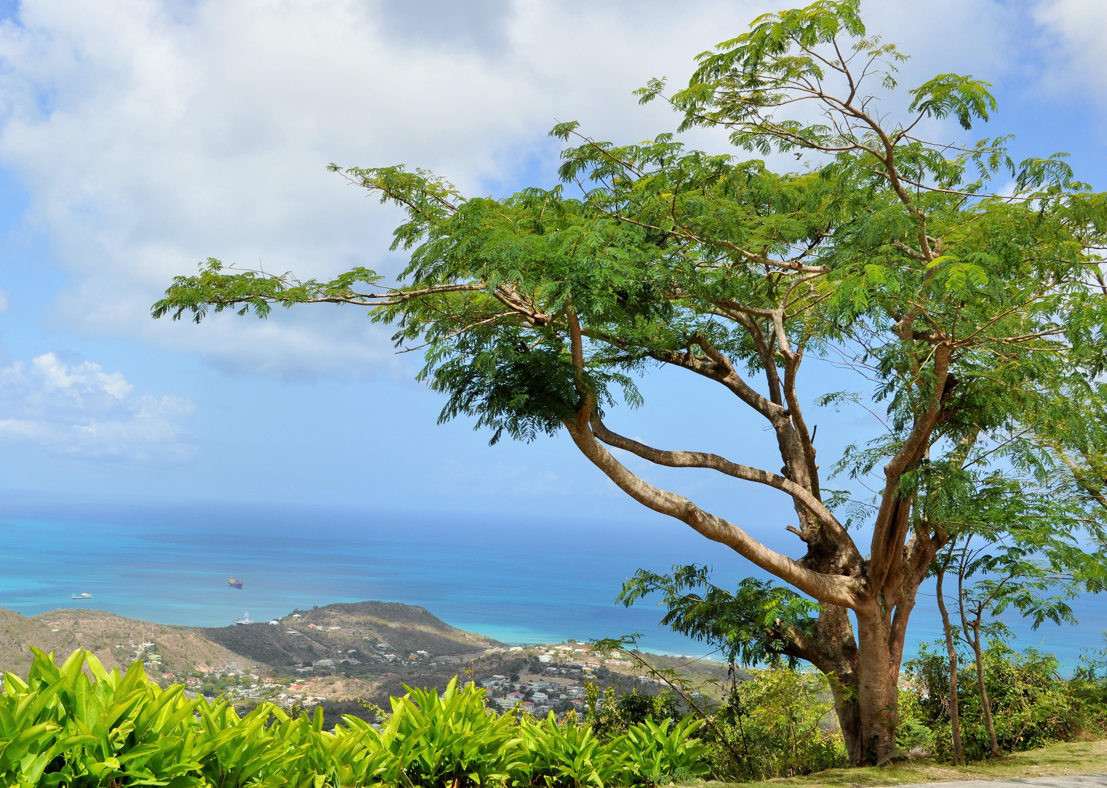 совсем картинка тропического дерева определяют светлым пятнам