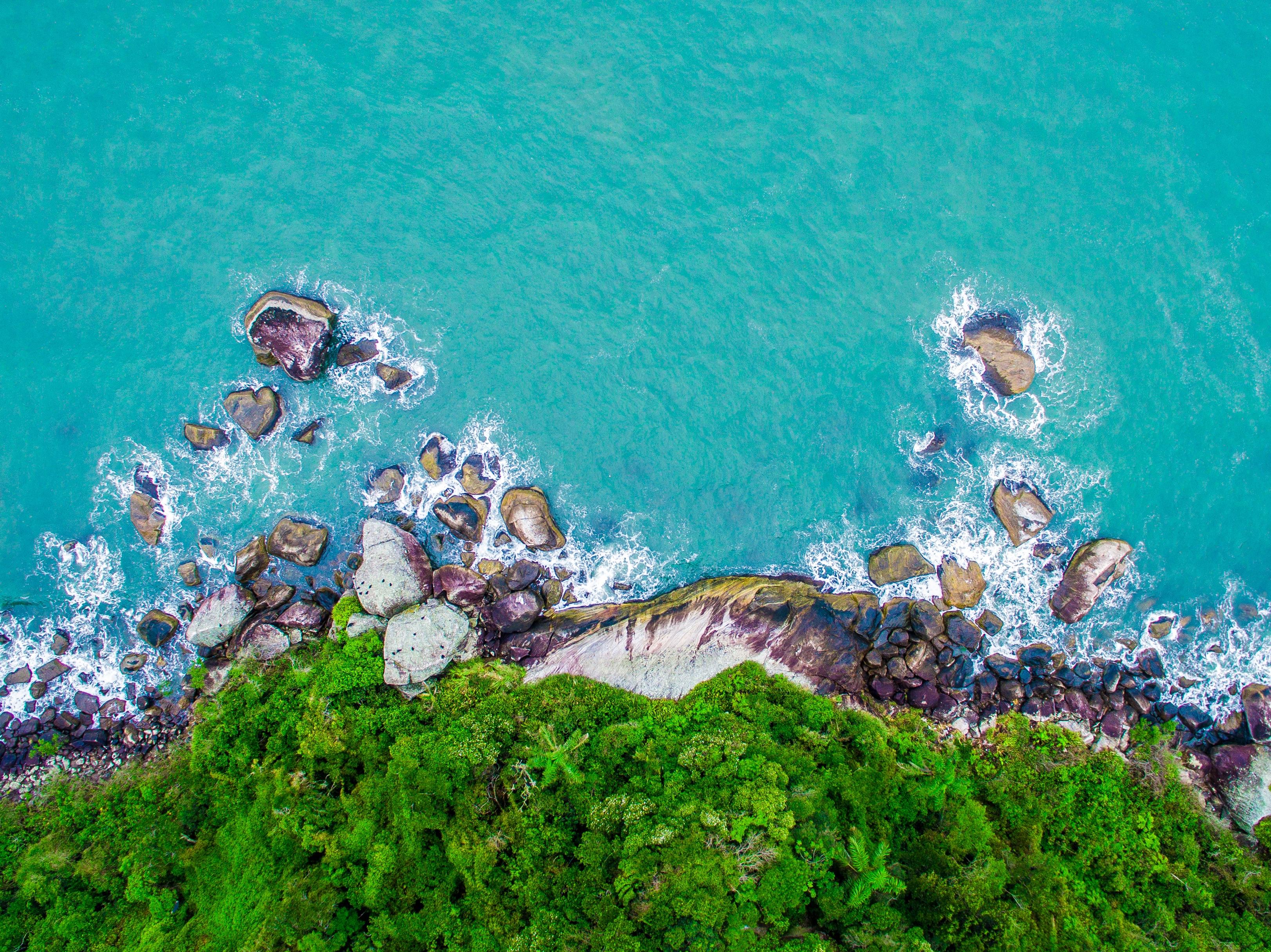 Free Images : sea, tree, water, rock, flower, underwater ...