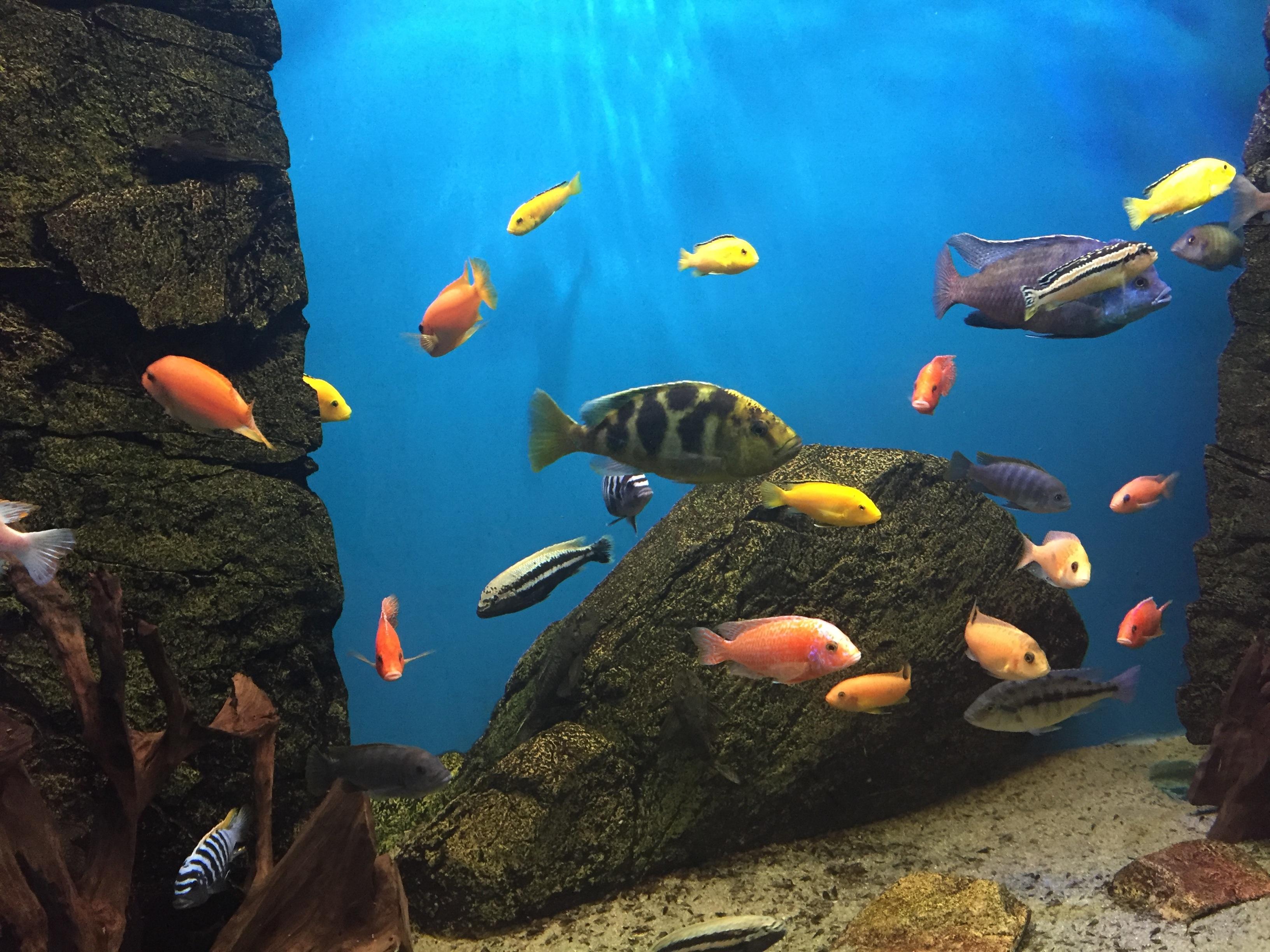 картинки с рыбами аквариумные жителей самары