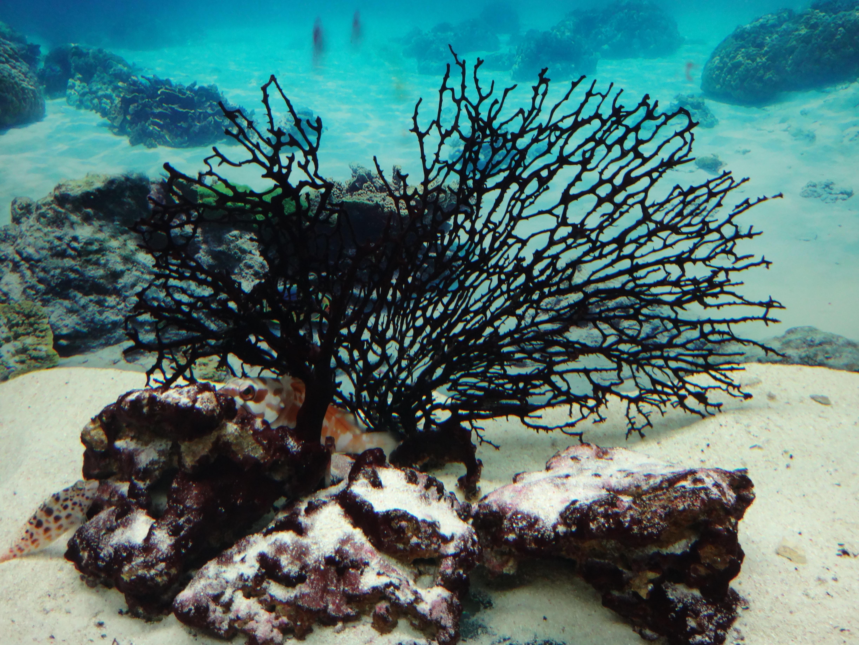 Gambar Bawah Air Rumput Laut Batu Karang Akuarium