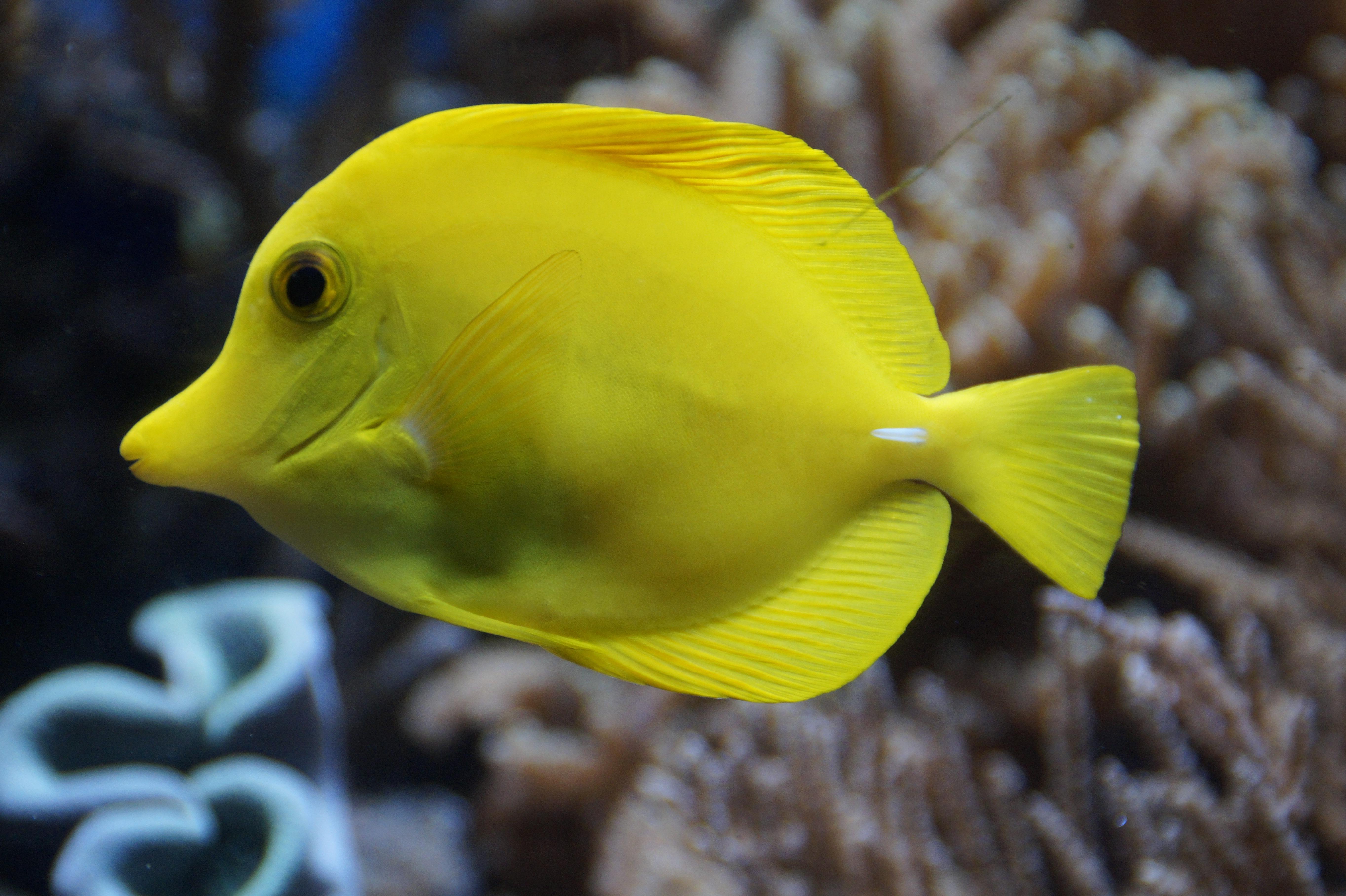 рыба с клювом картинки том