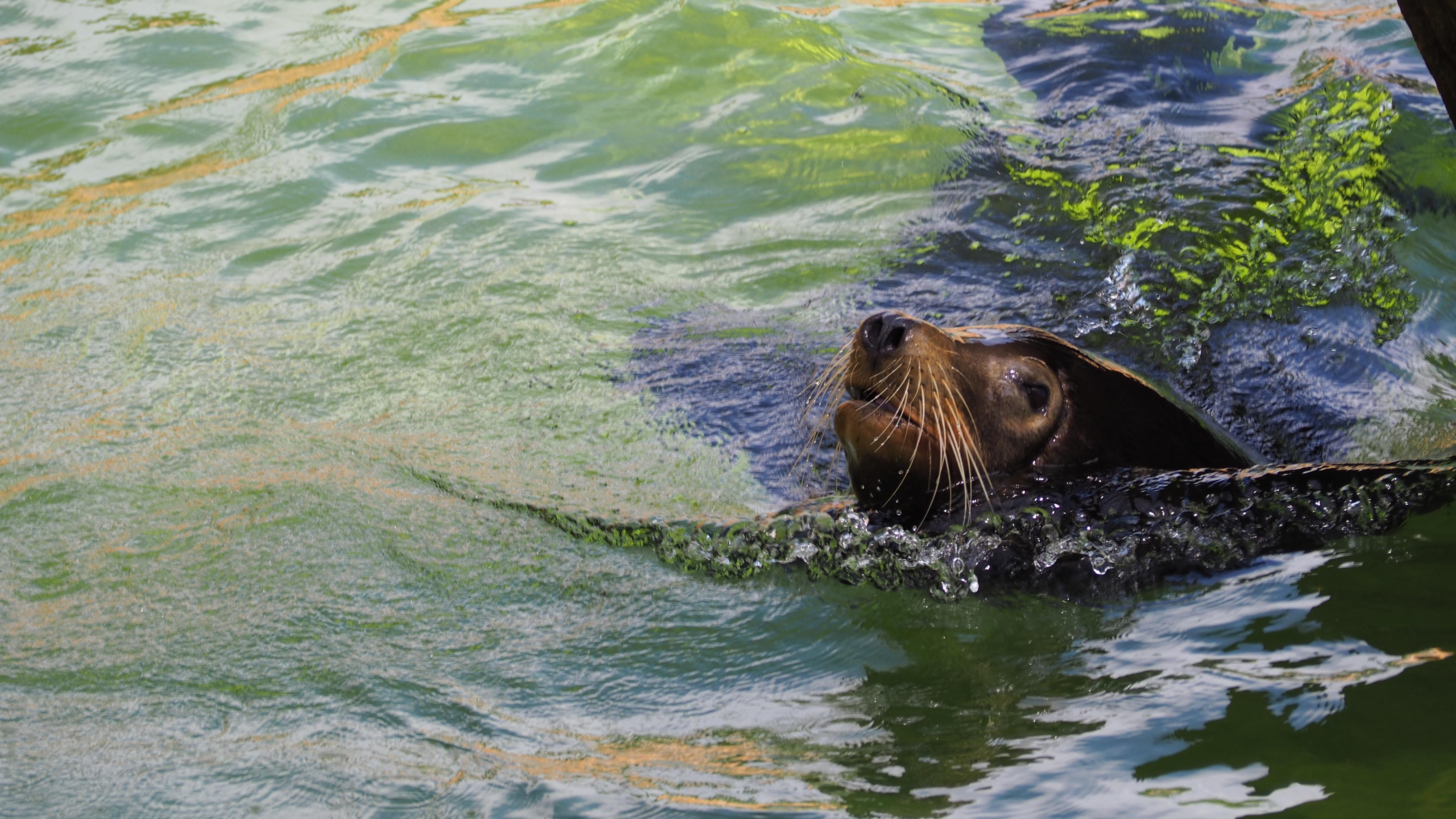 57 Gambar Binatang Laut Berwarna Gratis Terbaik
