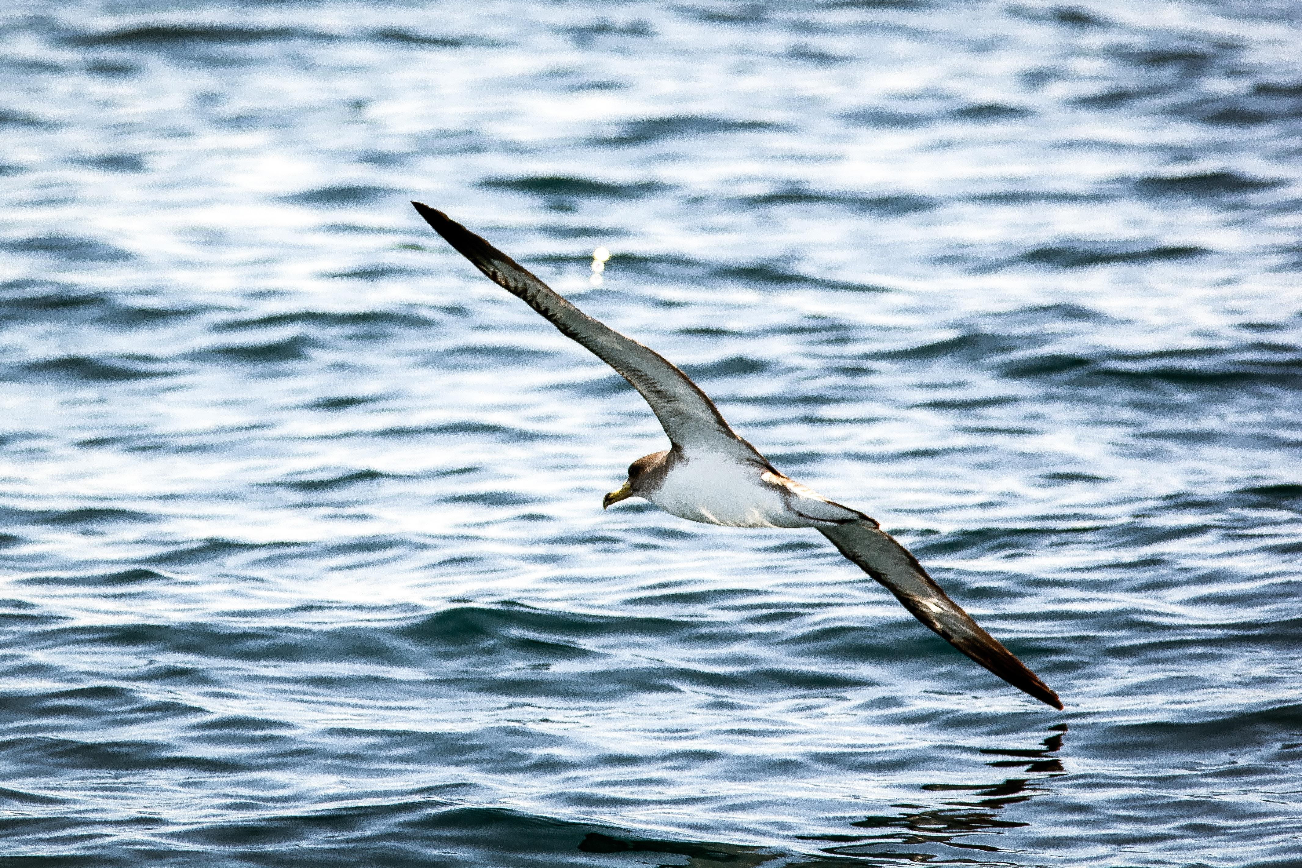 отметить, что чайка над морем фото окружена реликтовым