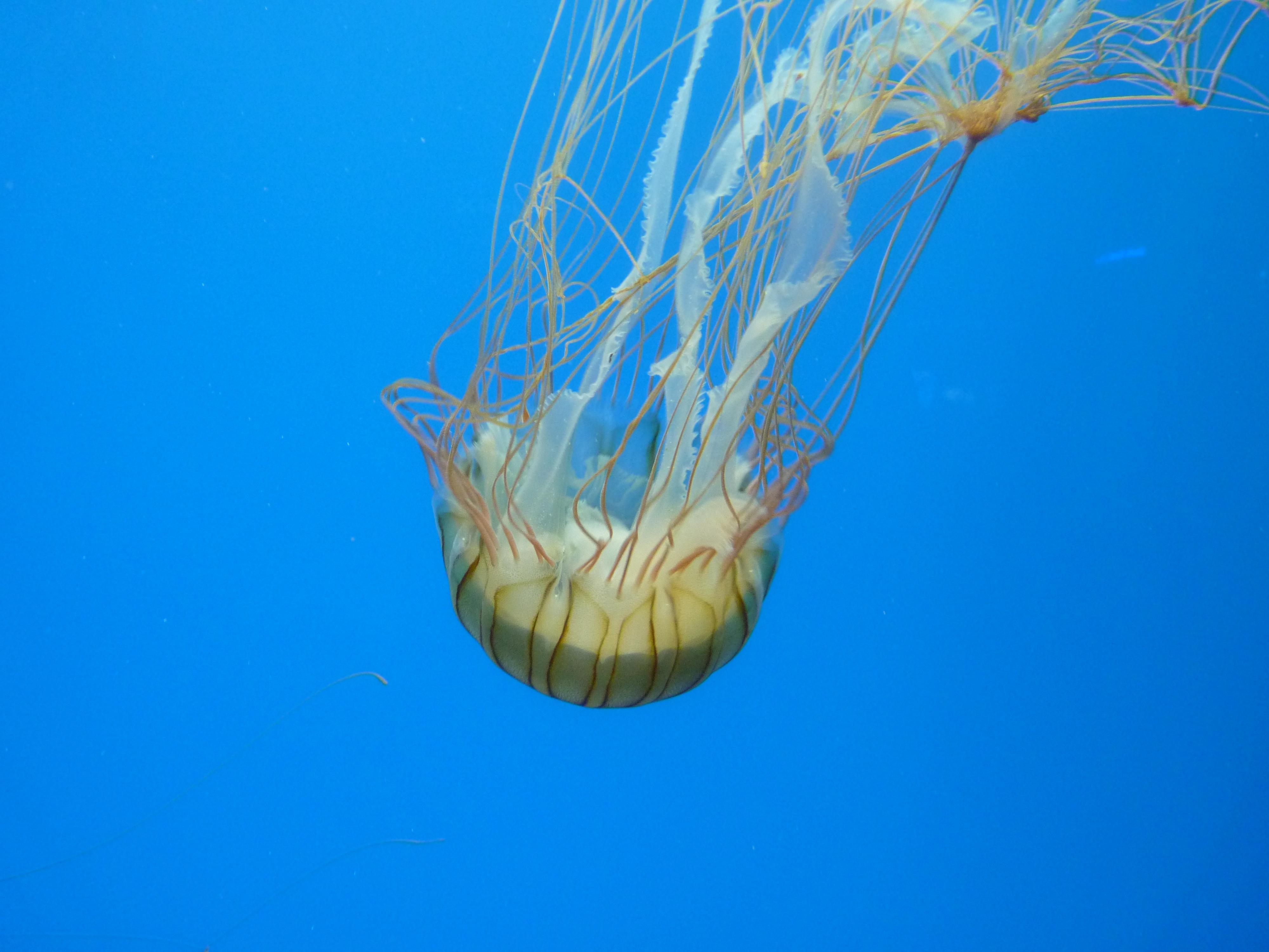 67+ Gambar Hewan Zooplankton Gratis Terbaru