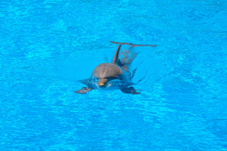 Fotos gratis mar agua saltar submarino nadar piscina azul