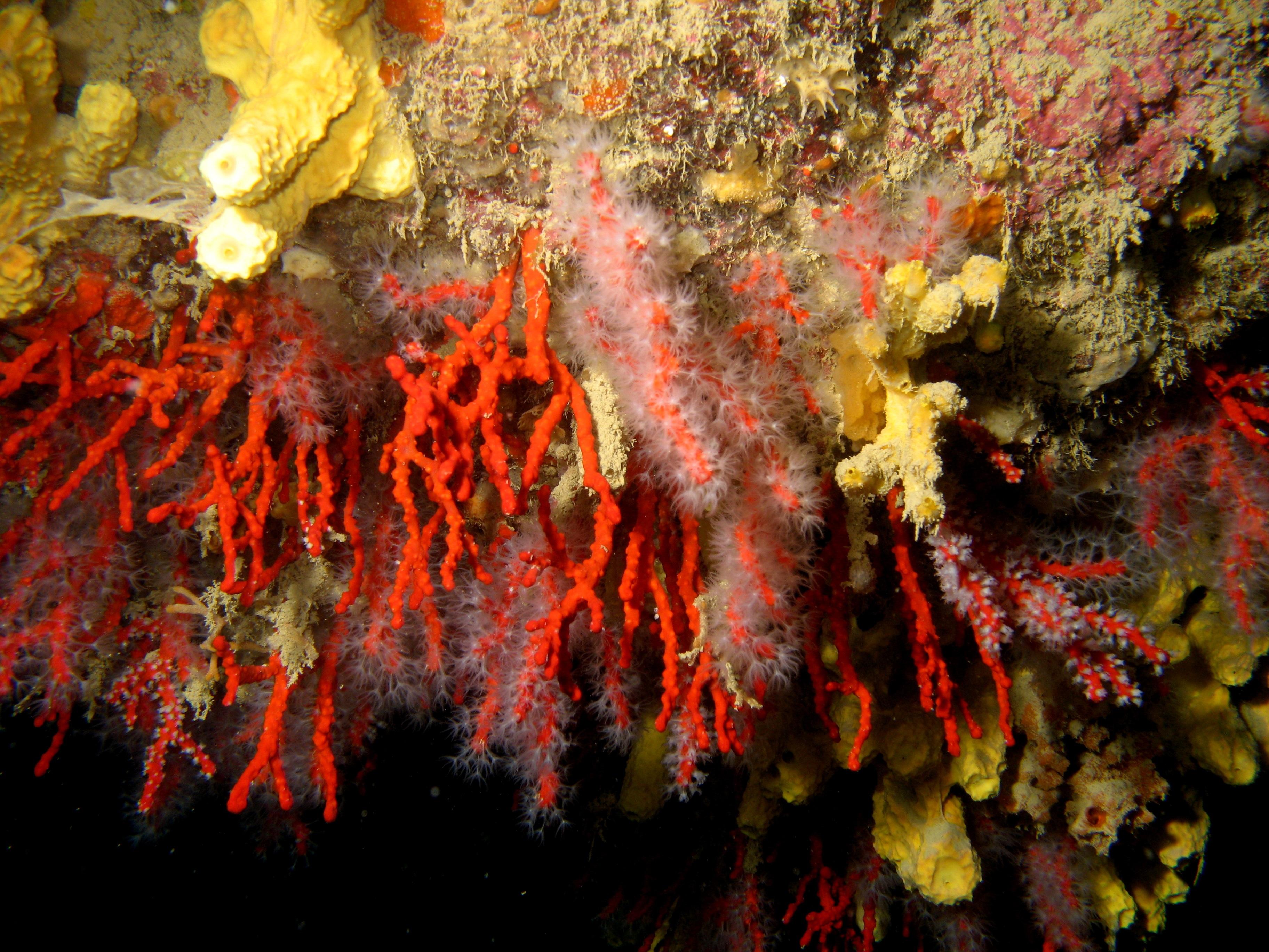 Immagini belle mare acqua foglia fiore formazione for Immagini coralli marini