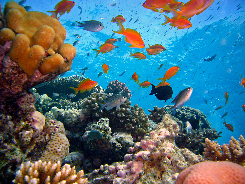 Gambar Alam Menyelam Bawah Air Warna Warni Fauna Hewan Laut