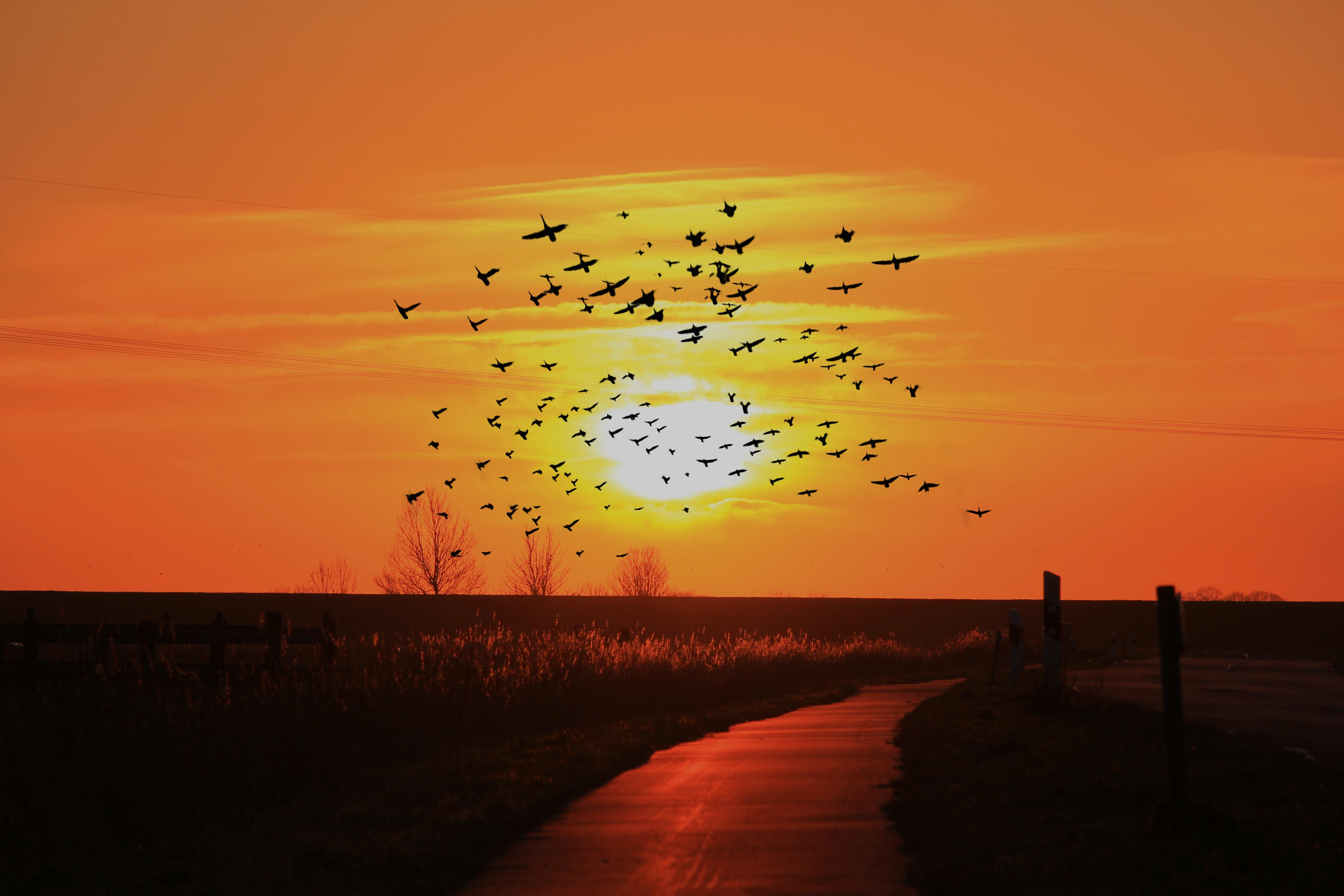 коллекция красивое фото облака птицы закат рассвет скачивания, можете распечатать