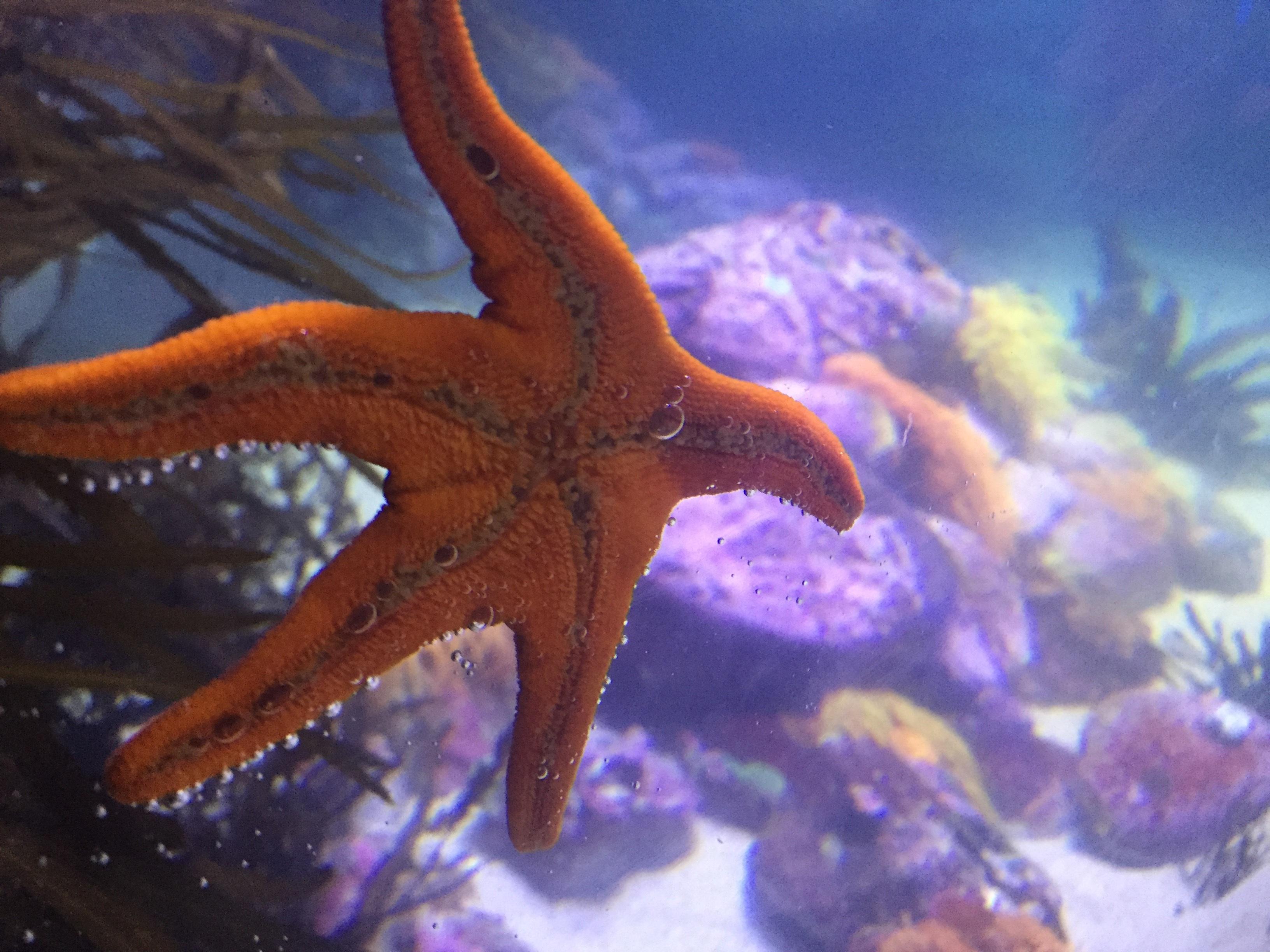 42+ Gambar Hewan Yang Hidup Di Air Laut HD
