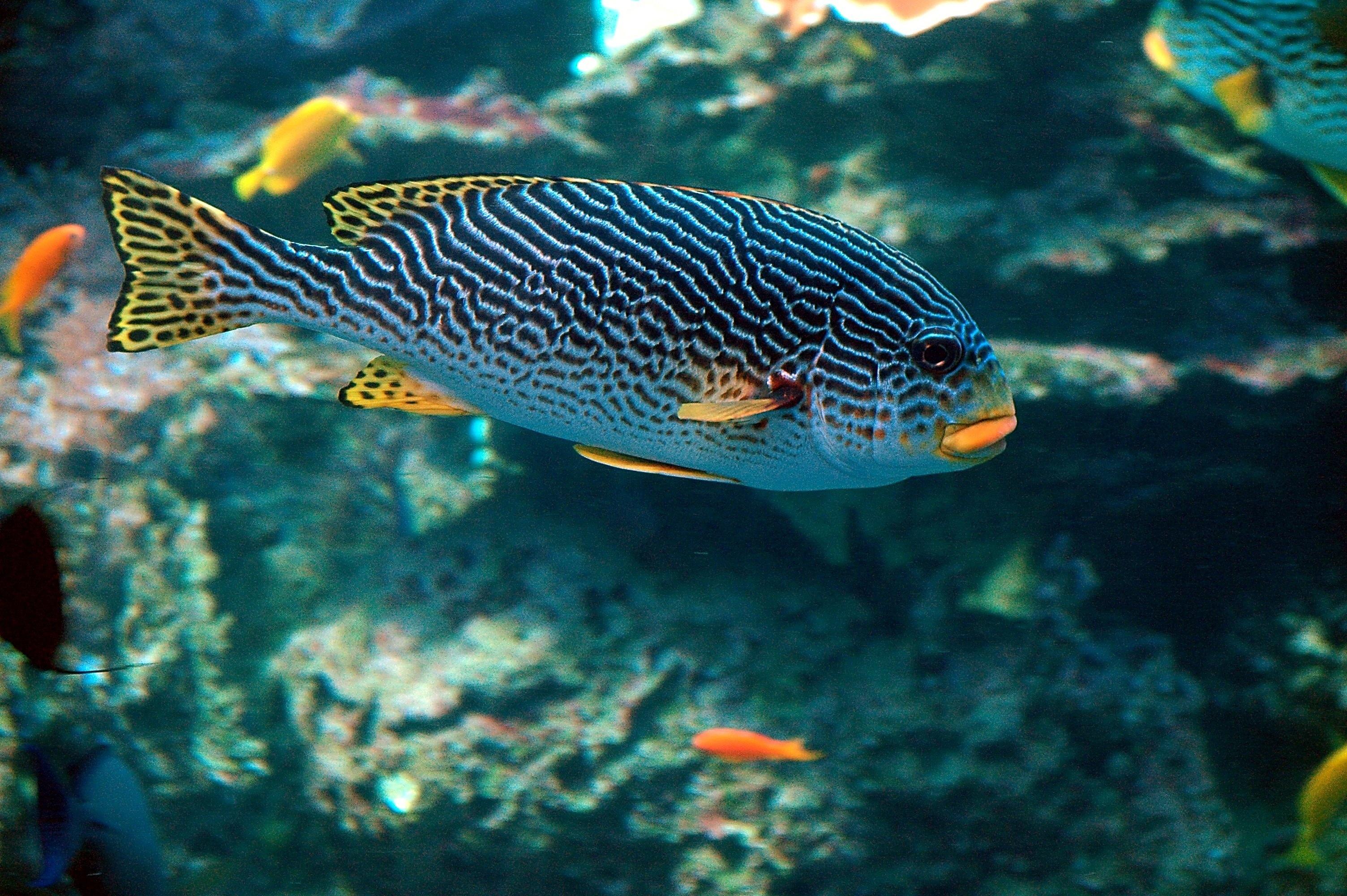 Free images water nature ocean animal wildlife for Sea water fish