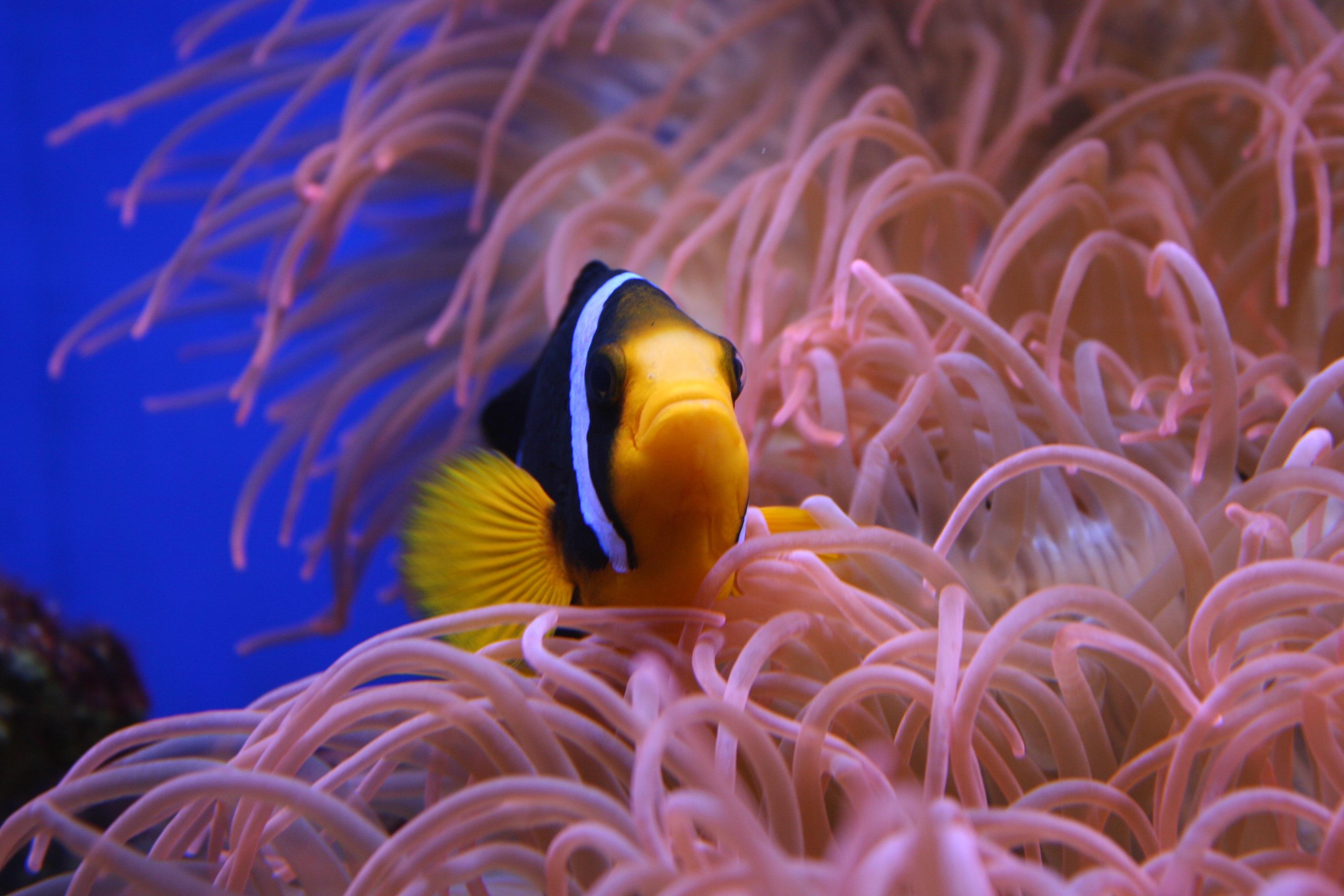 Free images water nature ocean animal wildlife wild for Sea water fish