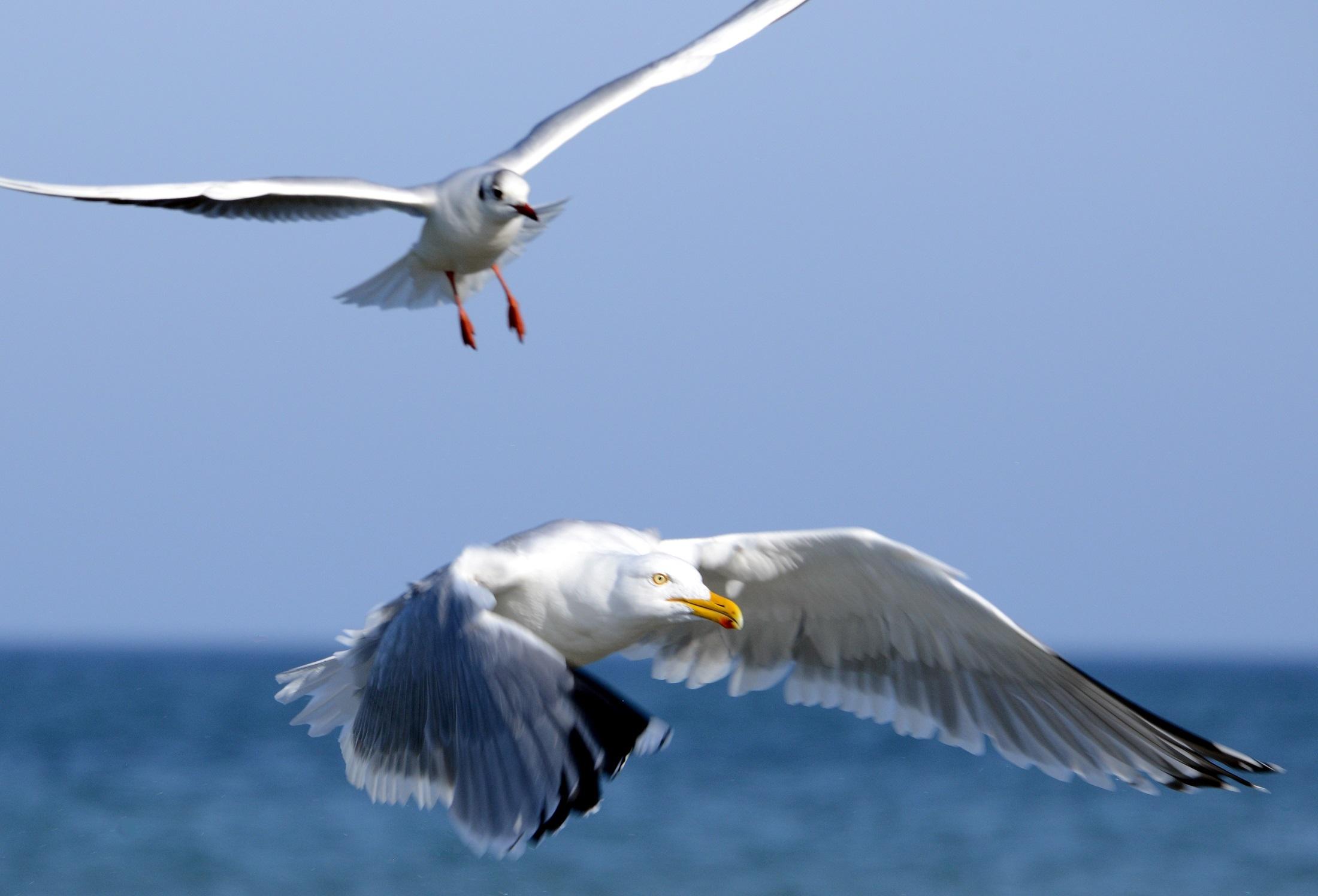 Free Images : sea, water, nature, ocean, bird, wing, sky ...