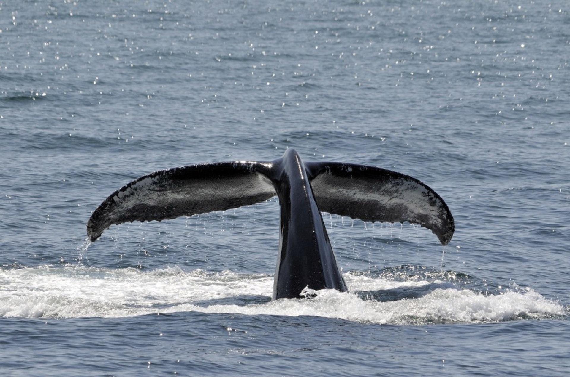 хвост кита картинки гениталии номерах это