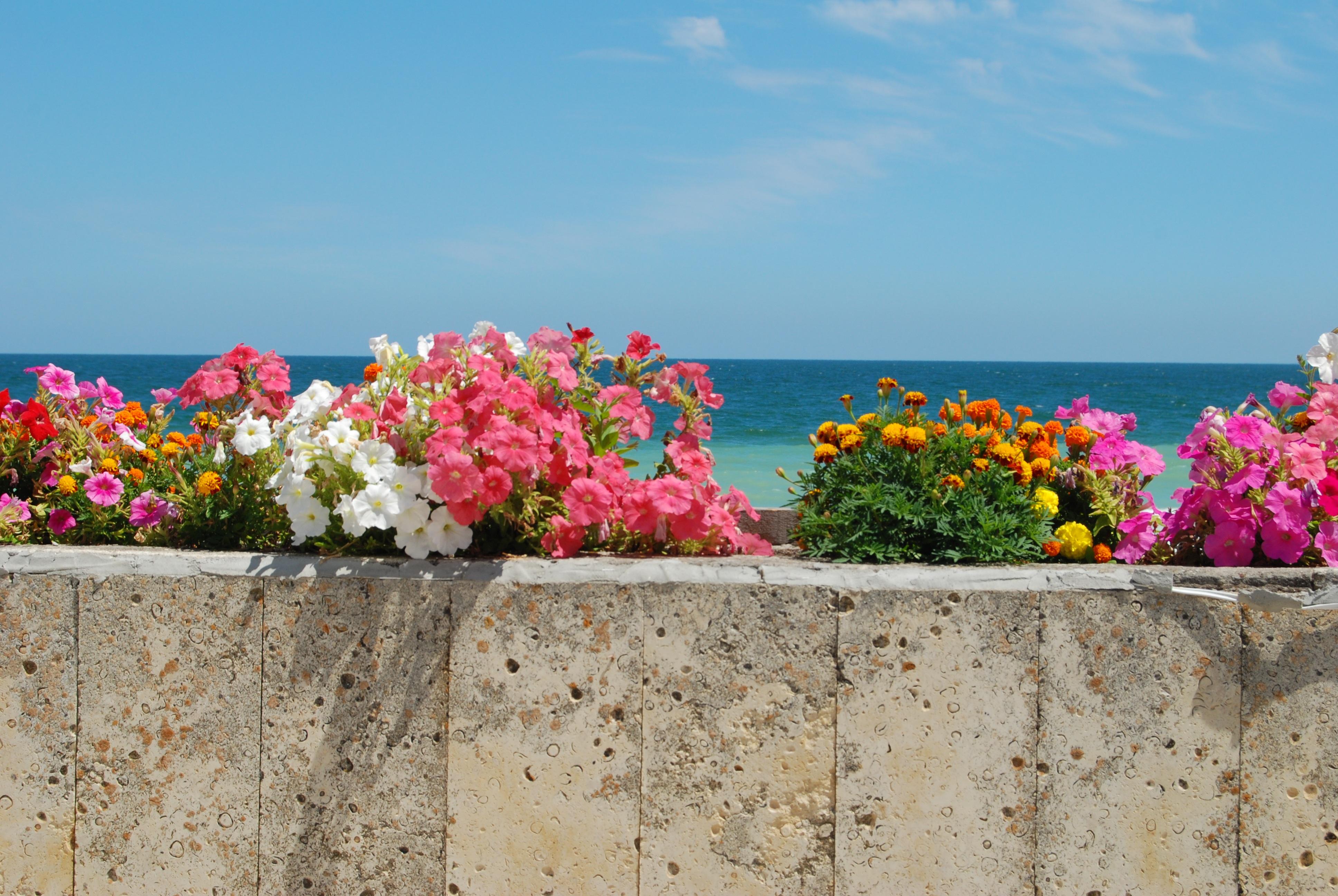 открытки цветы на берегу океана потолка пола часто