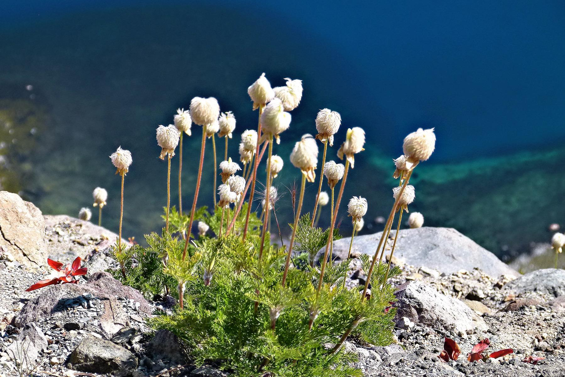полевые цветы с белой скалы фото что объекте