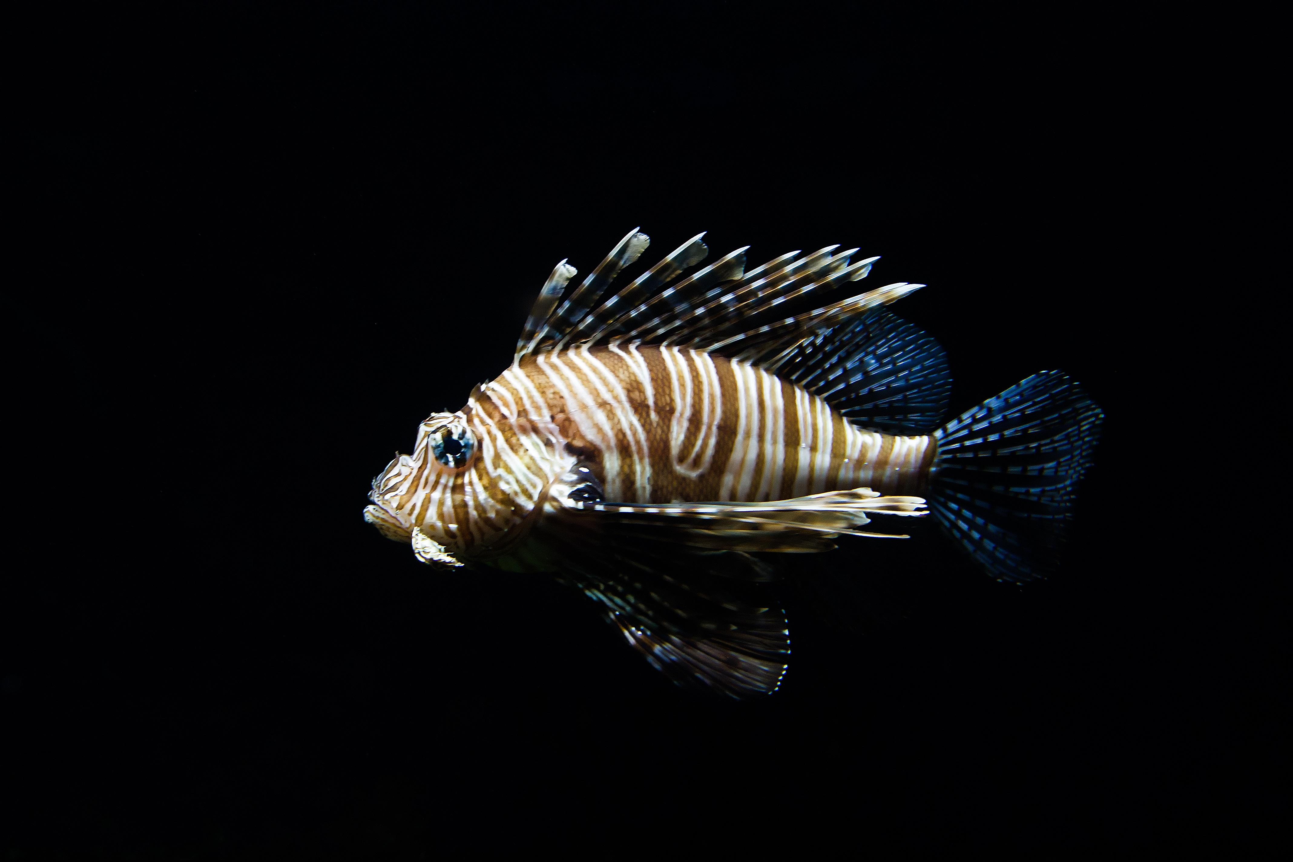Images Gratuites : mer, eau, la nature, aile, animal, faune, sous ...