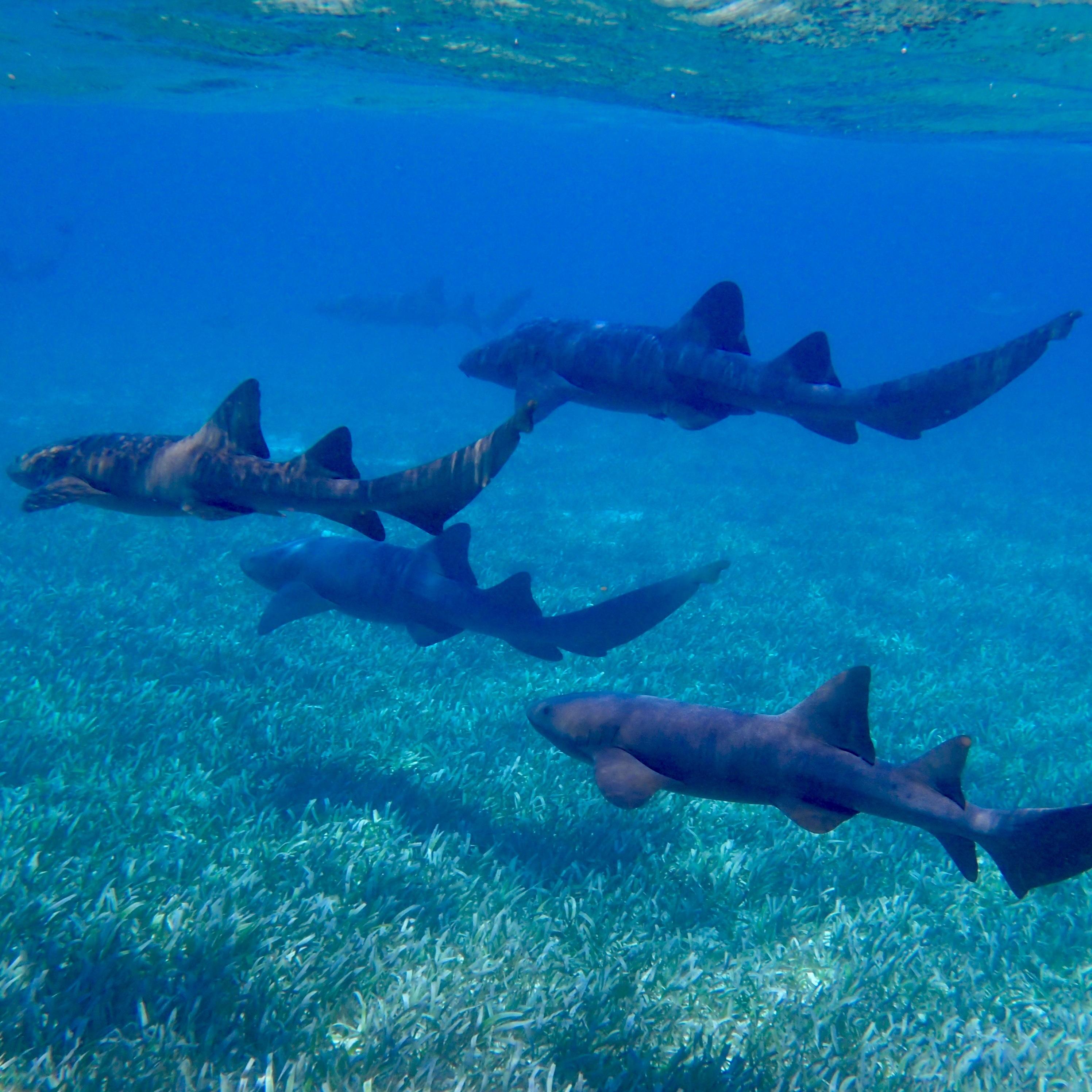 Free Images : sea, water, ocean, animal, diving, wildlife