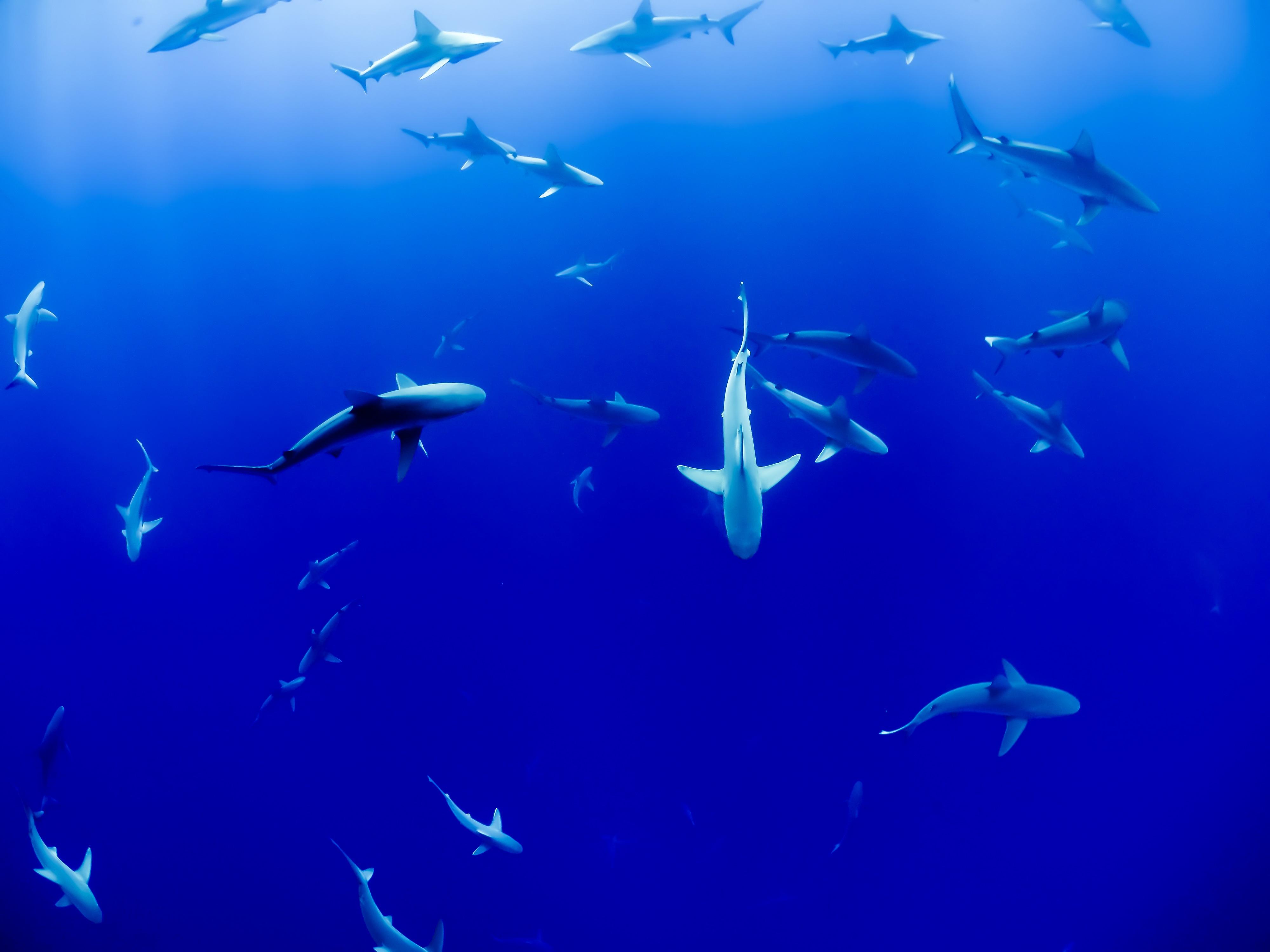 Free images sea water ocean animal underwater fish - Poisson shark aquarium ...