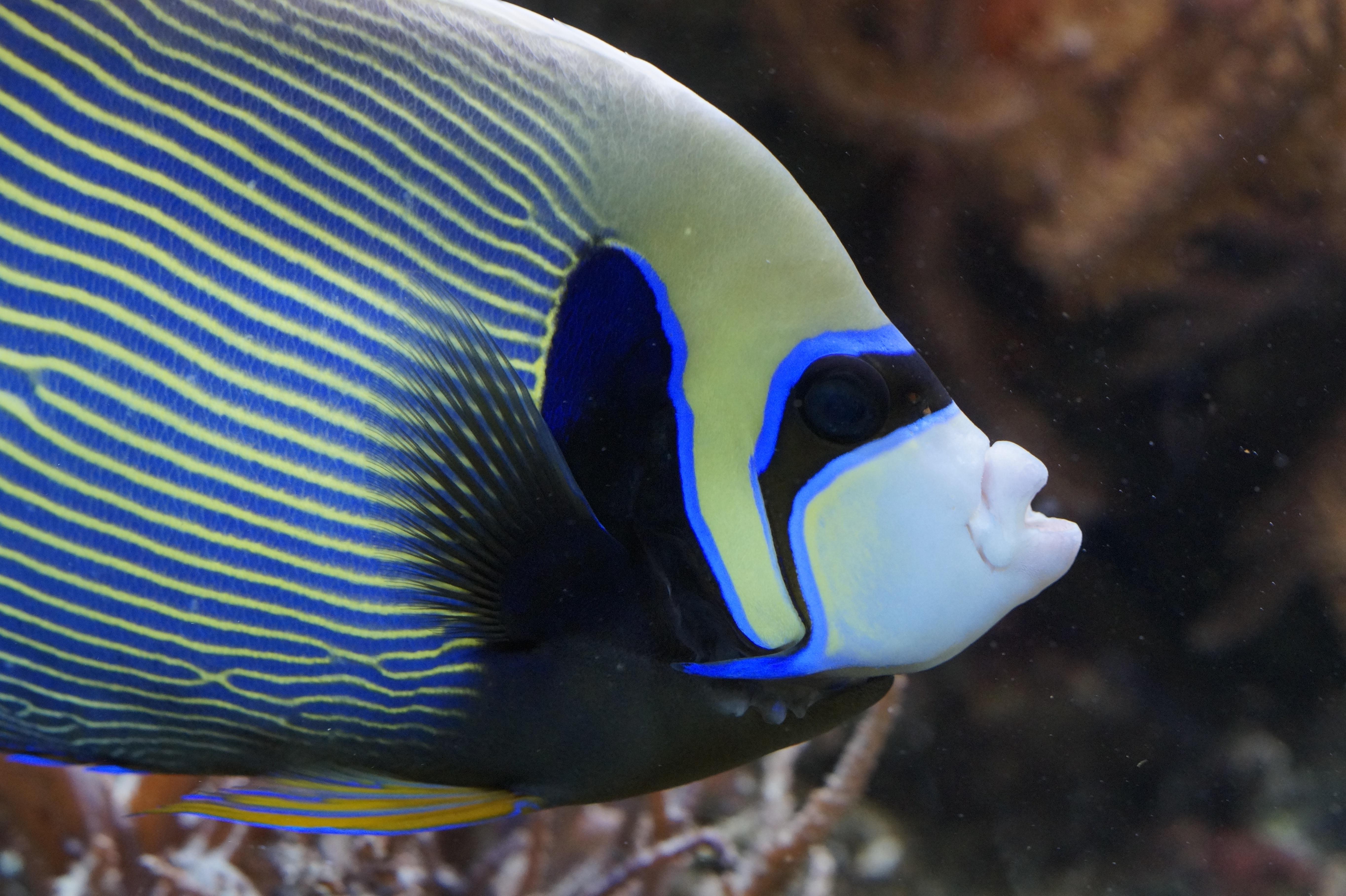 Fotos gratis  Oceano nadar patrn color biologa azul
