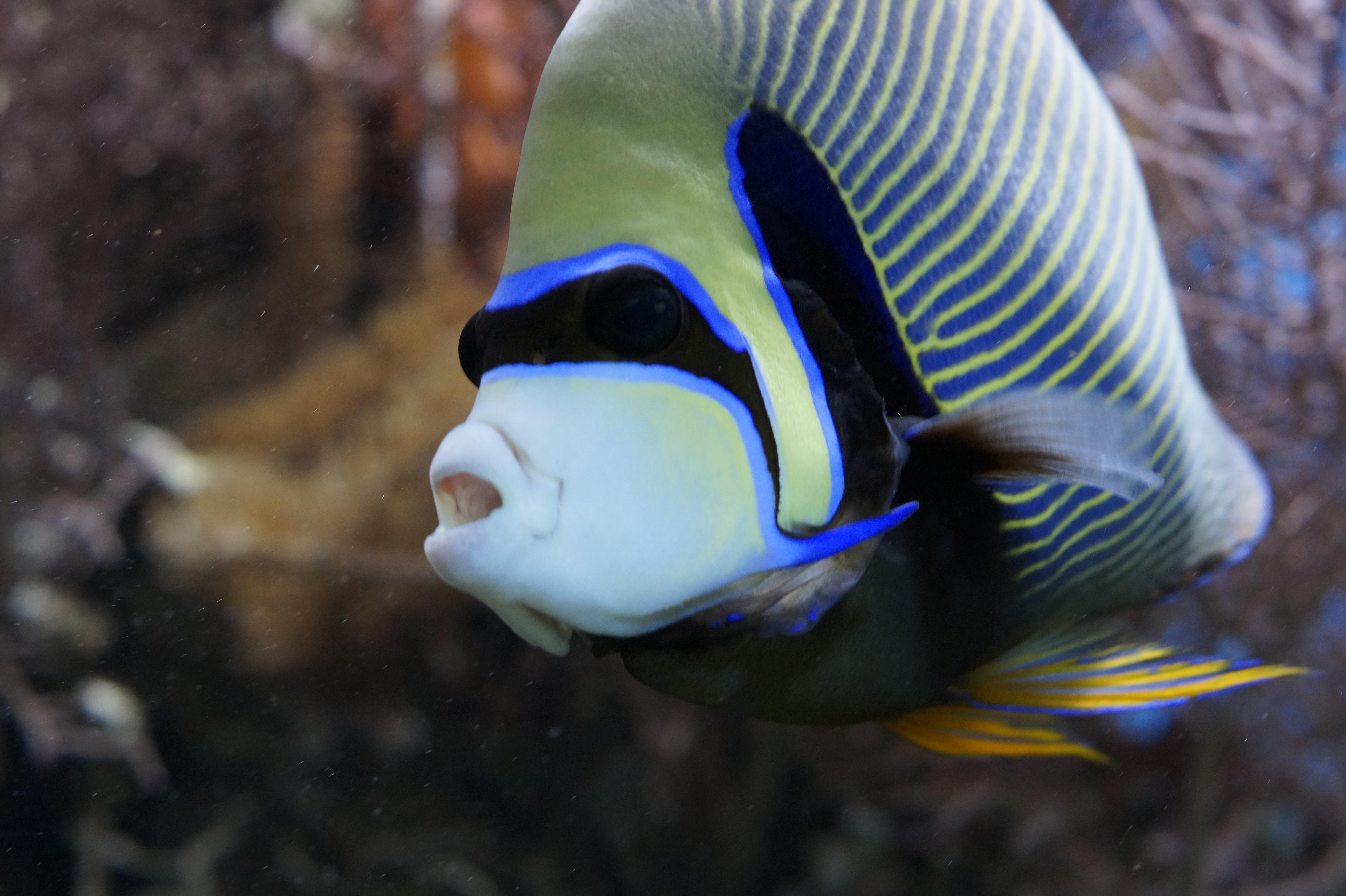 Fotos gratis  mar Oceano nadar patrn color biologa azul