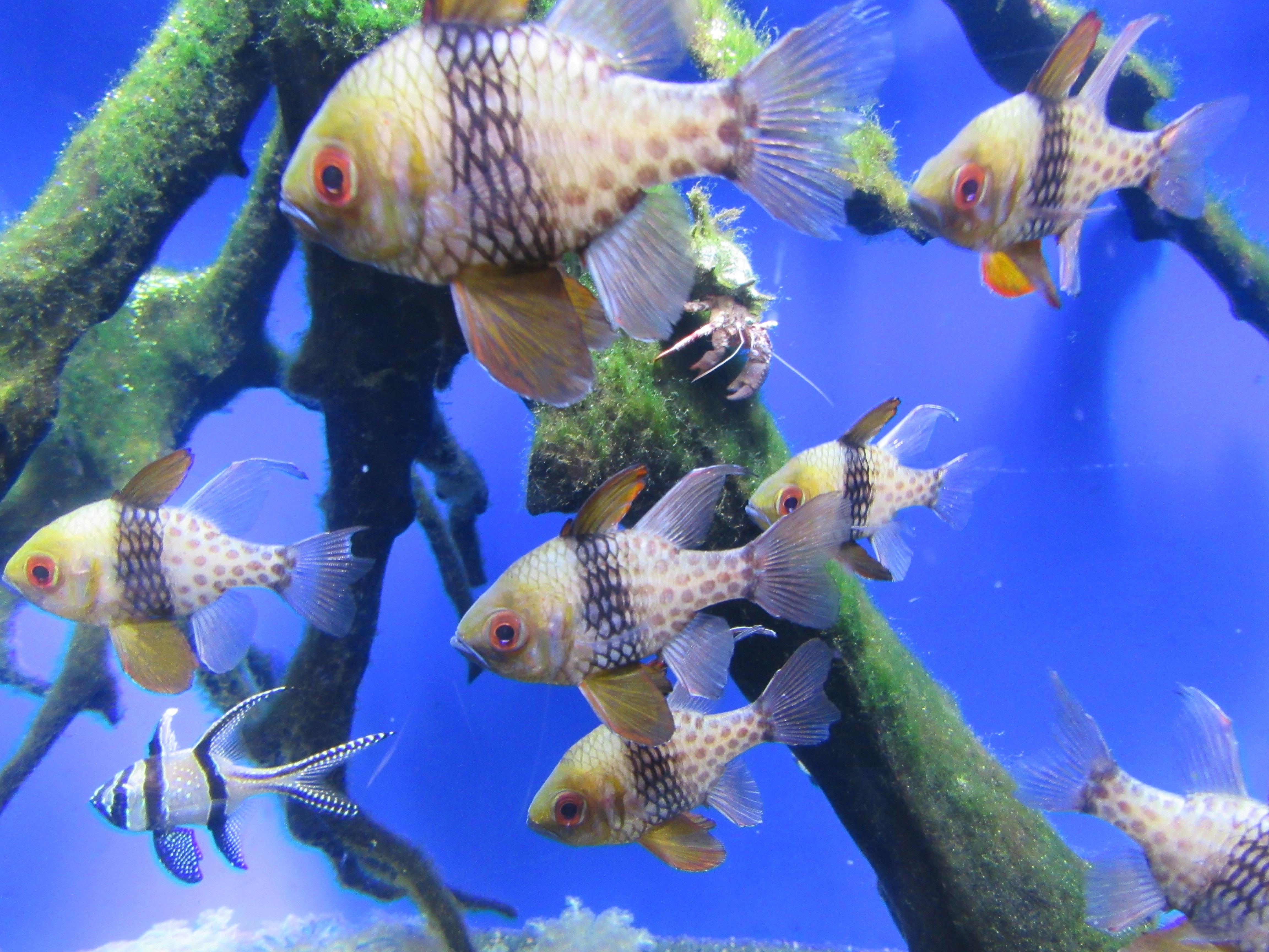 Free images sea water ocean animal wildlife for Reef tropical fish