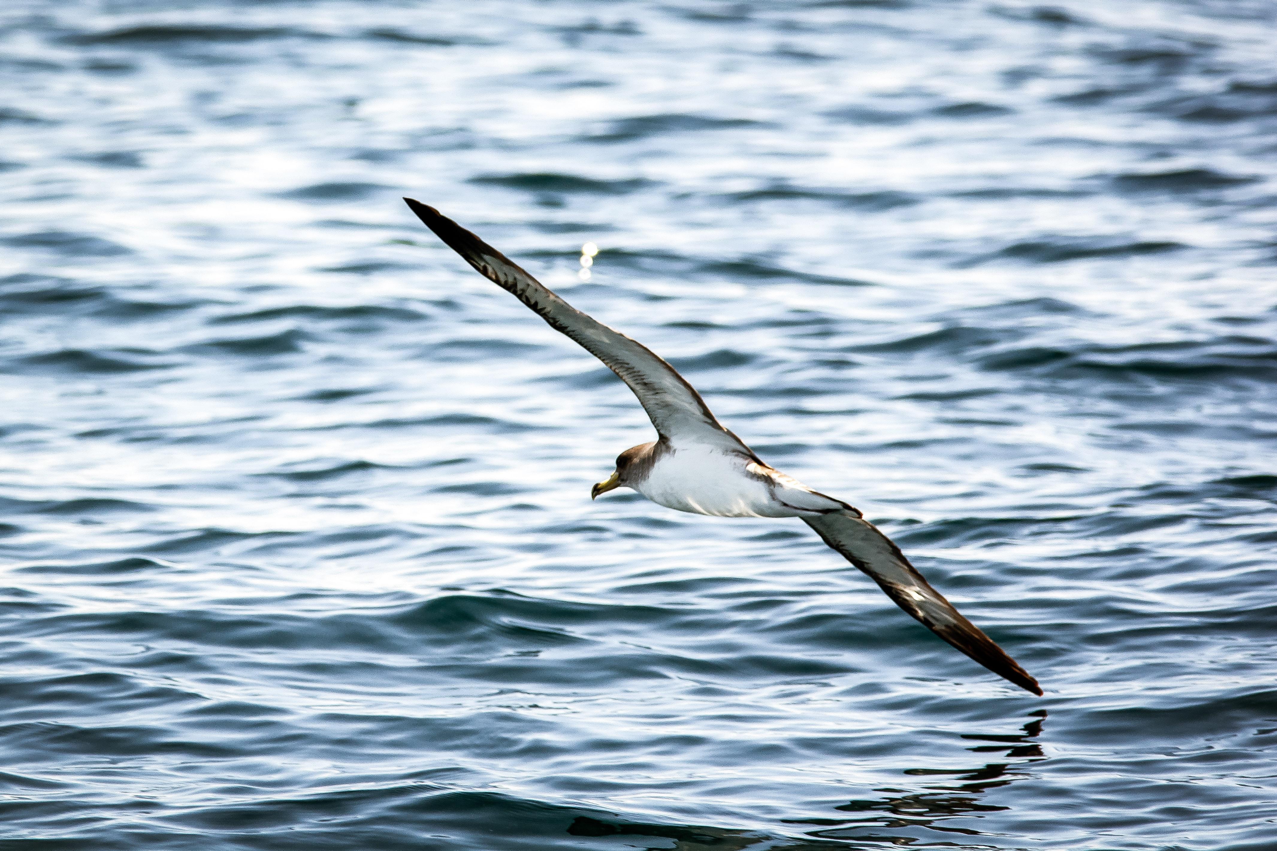 сама фото морских чаек в полете живое существо, требующее