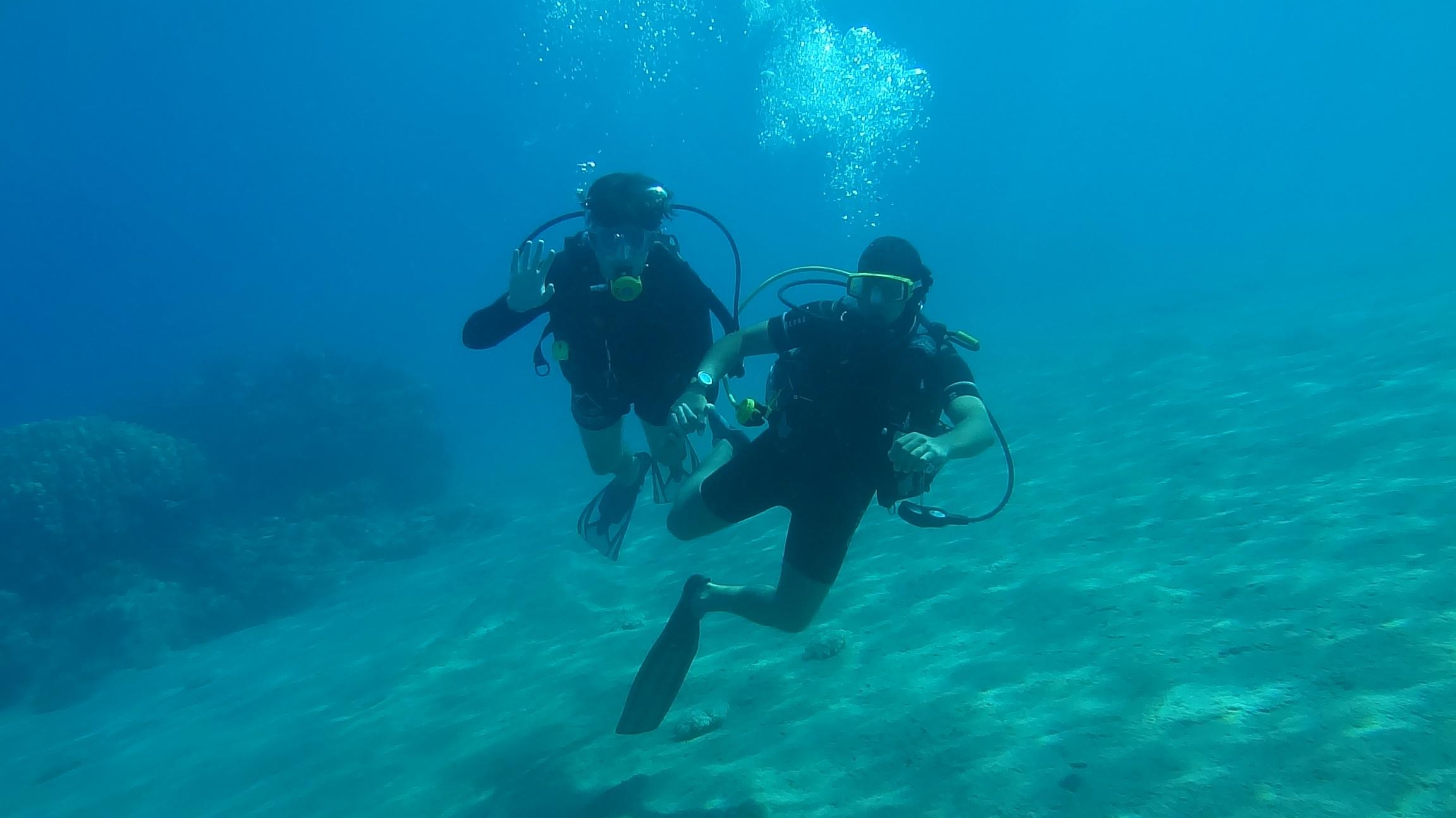 Free images sea ocean summer blue fish swimming - Dive deep blue ...