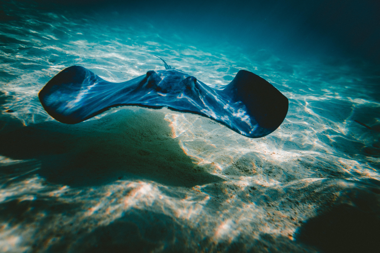 Fotos Gratis Mar Agua Oceano Ola Submarino Biolog 237 A