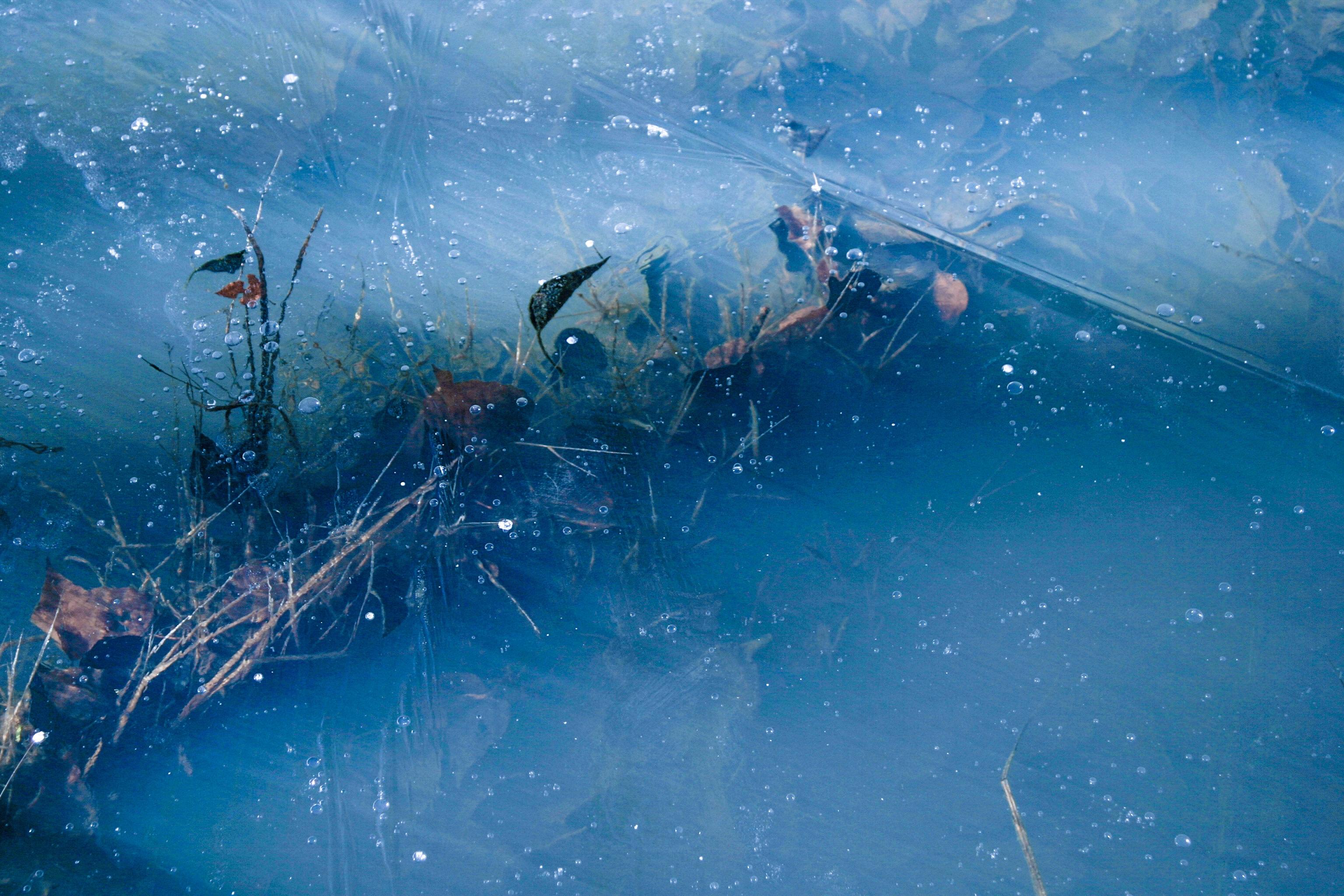 图片素材 波 水下 蓝色 屏幕截图 电脑壁纸 海洋生物学 深海鱼
