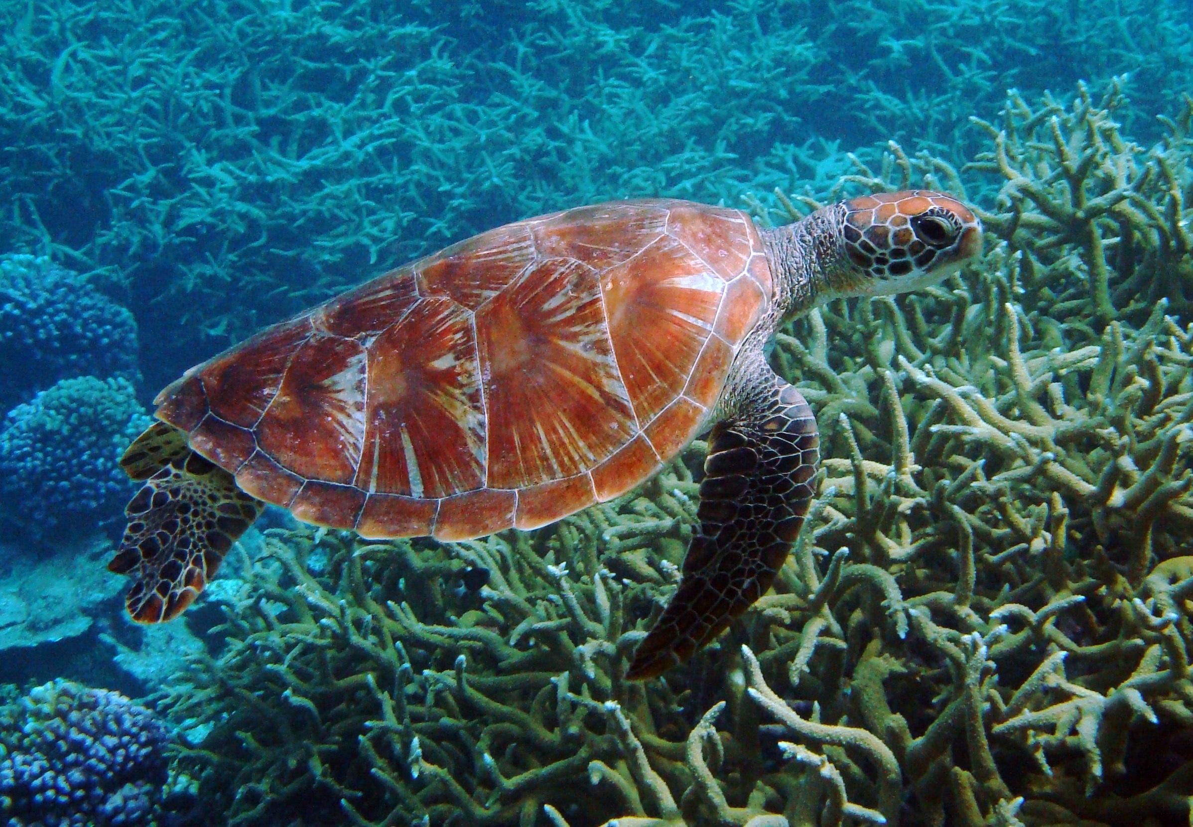 картинки океан и его обитатели собственноручно постное слоеное
