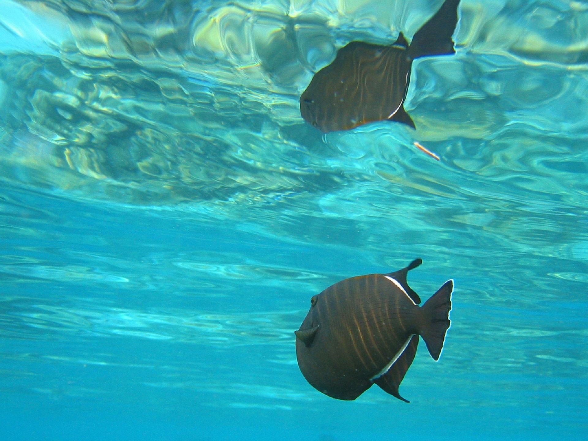 free images sea water ocean wildlife underwater tropical