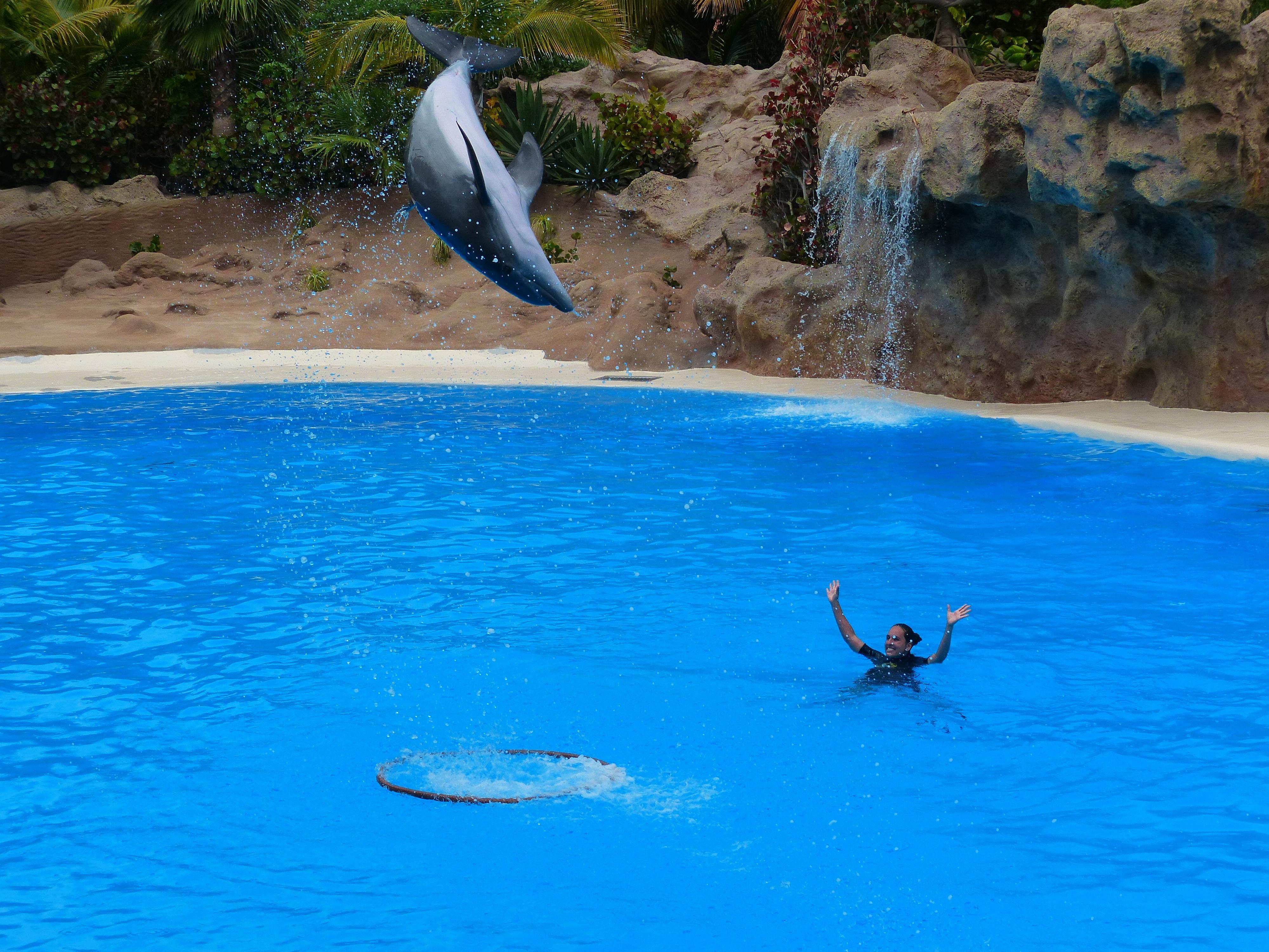 Fotos gratis mar agua anillo vacaciones alto piscina