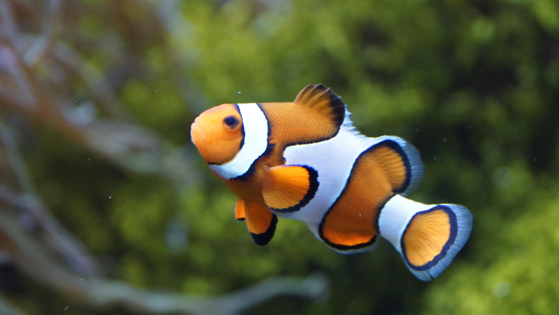 Gambar Laut Putih Bunga Margasatwa Bawah Air Jeruk Fauna