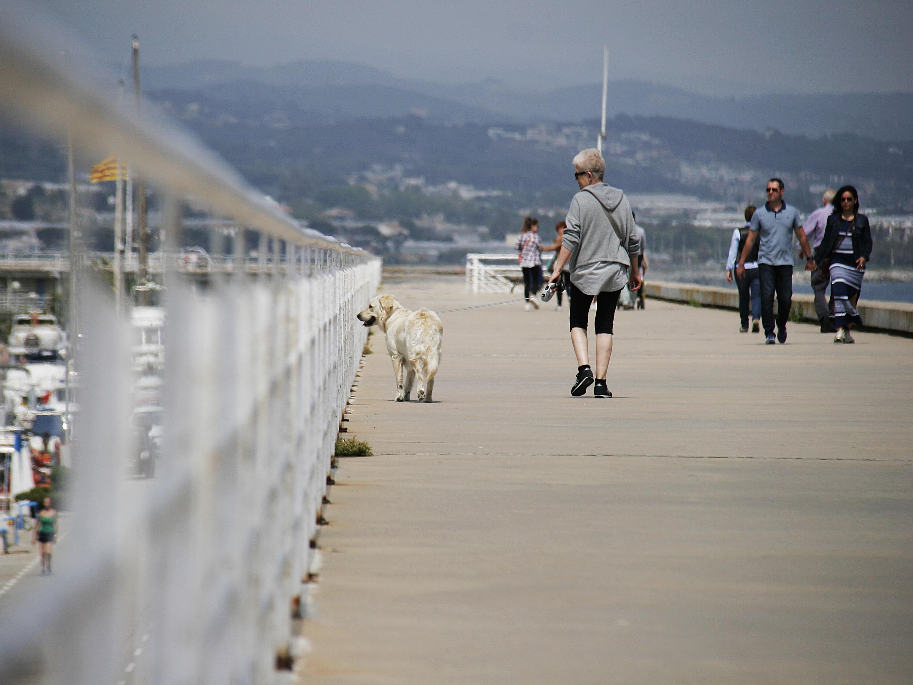 Gambar laut musim dingin Boardwalk anjing hewan gang #5: sea winter boardwalk dog animal walkway walk pet vehicle tourism race people walking