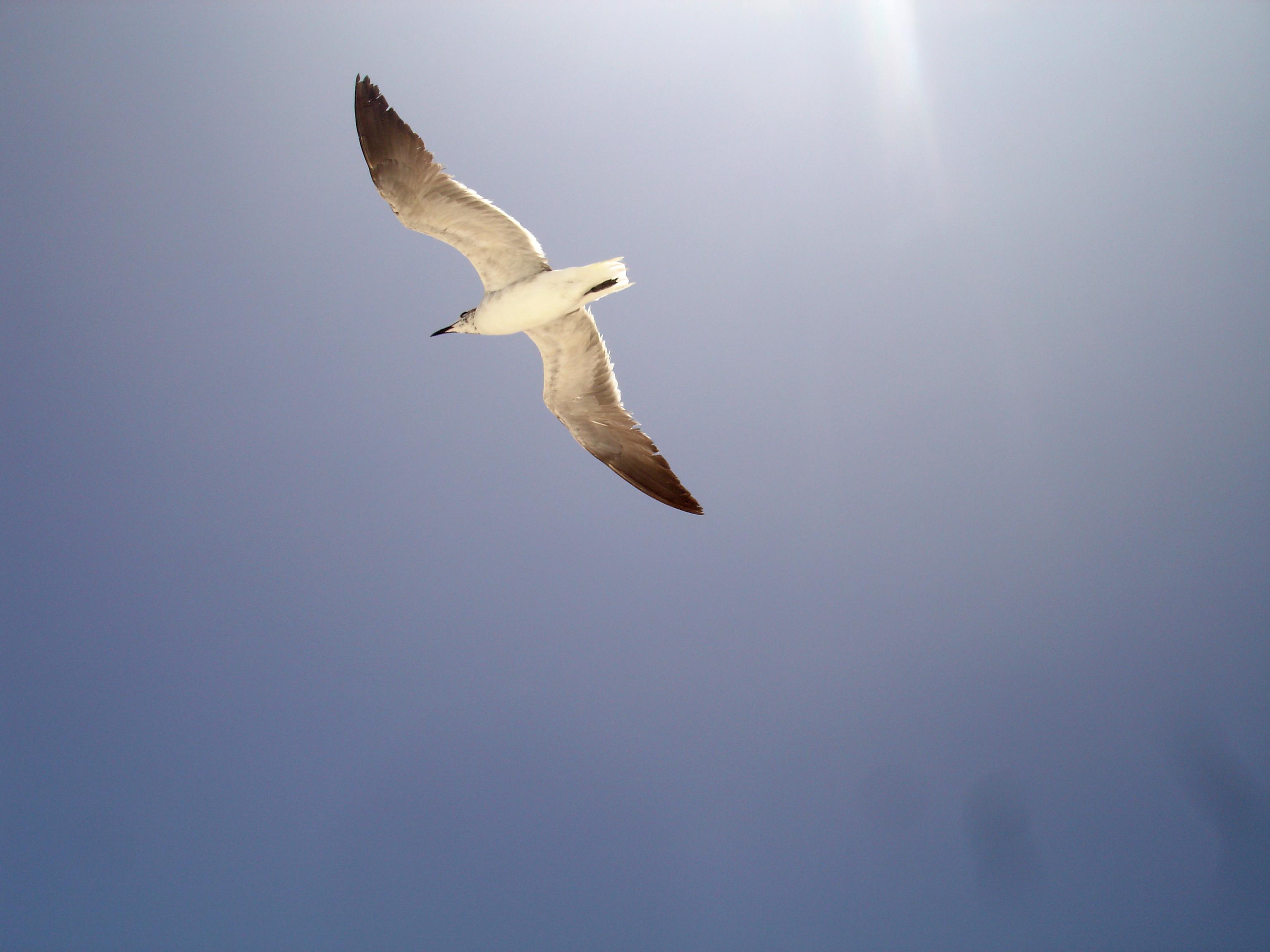 Έφηβος με μεγάλο πουλί