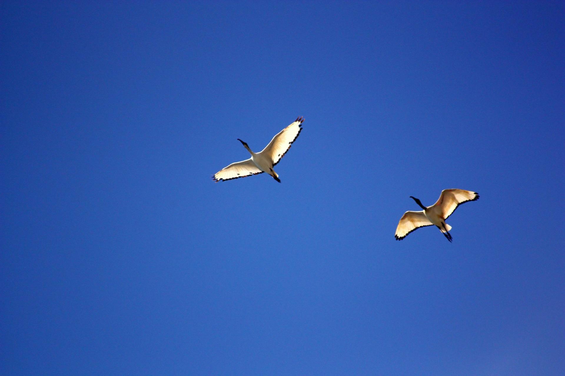 этот картинки летать в небе как птицы тысячи