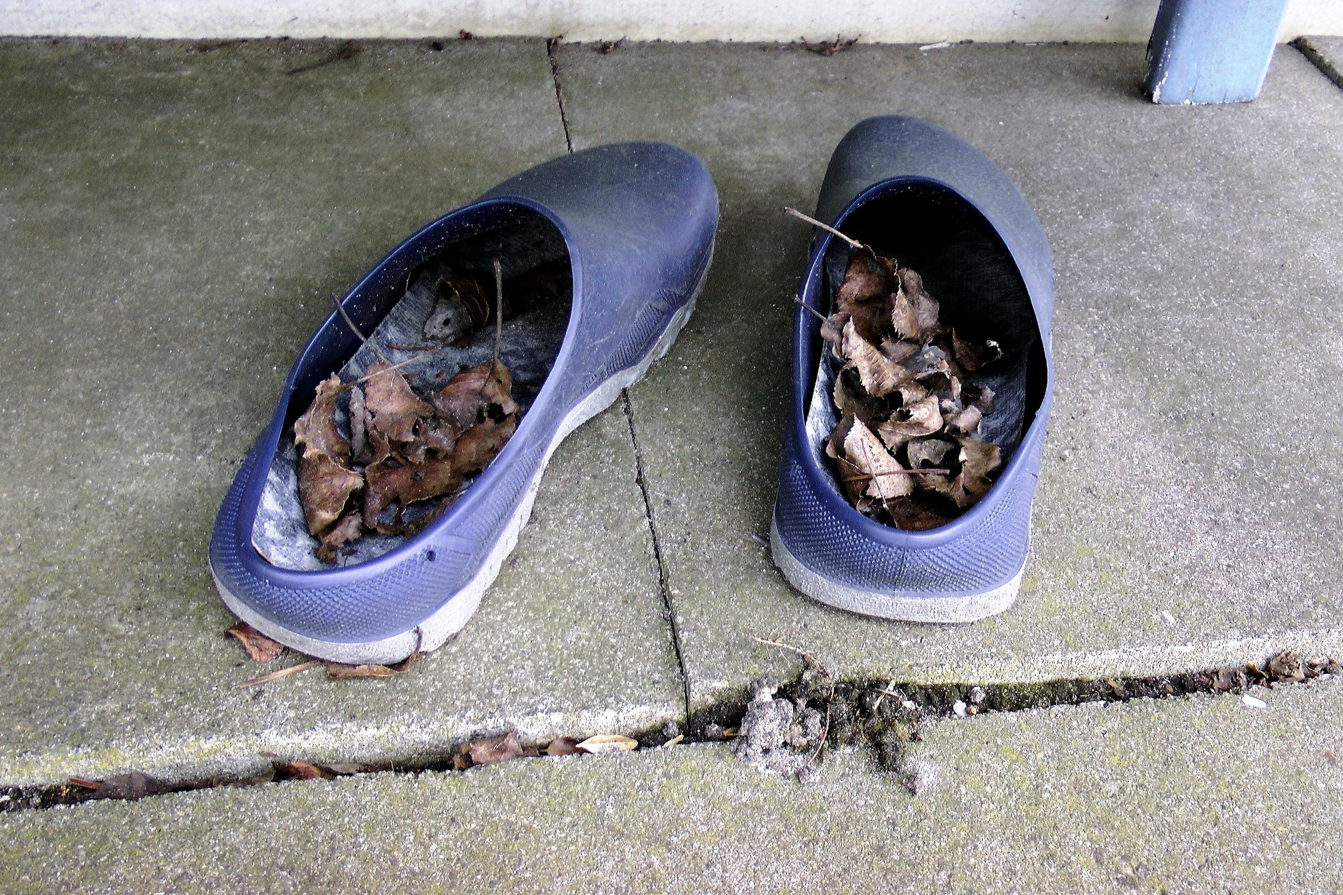 Images Gratuites : chaussure, bleu, pneu, feuilles séchées ...