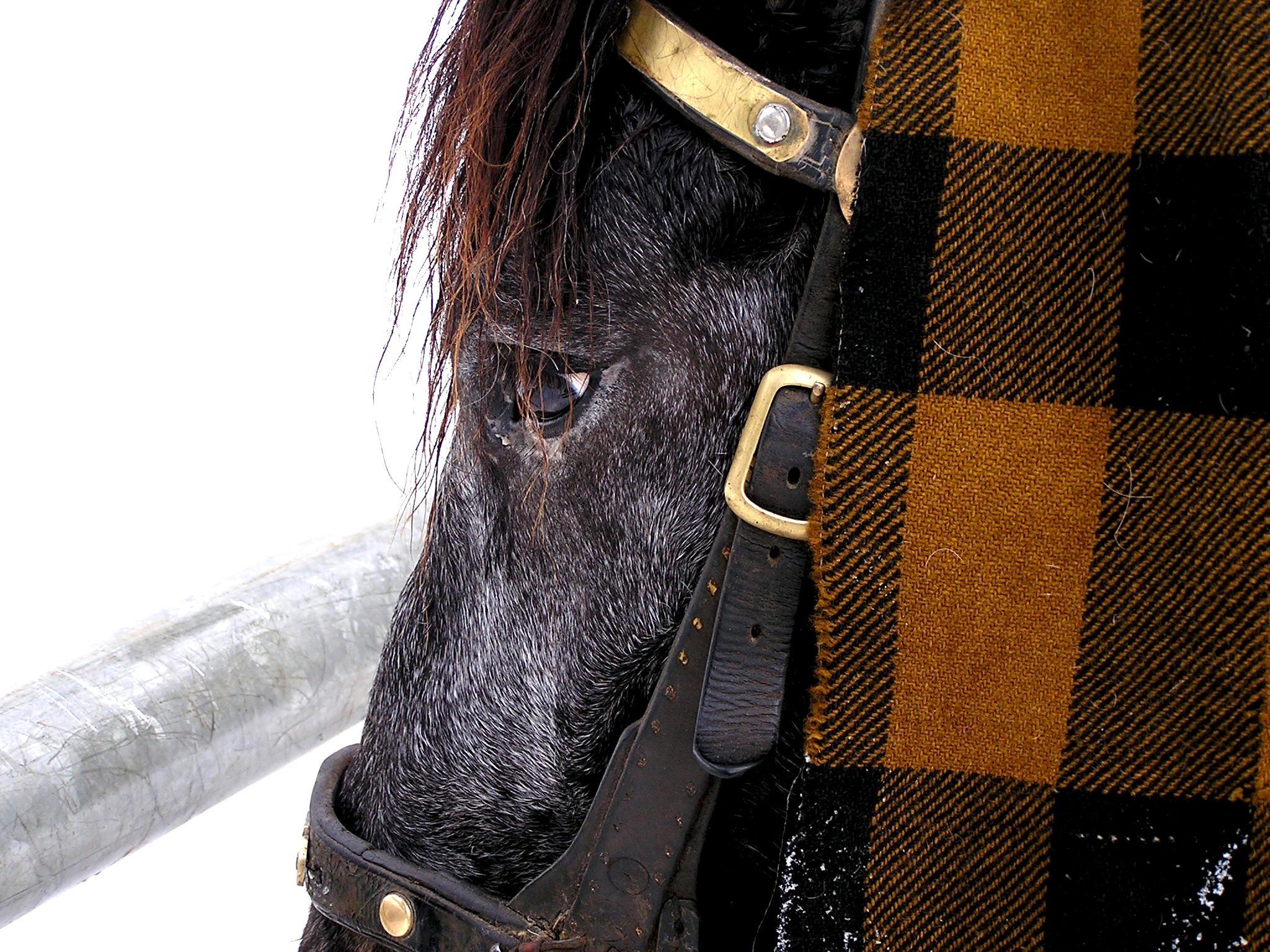 316fb1c9a2e sko læder dyr støvle mønster hest tøj sort jakke overtøj hovedtøj tekstil  design fodtøj hestehoved hest