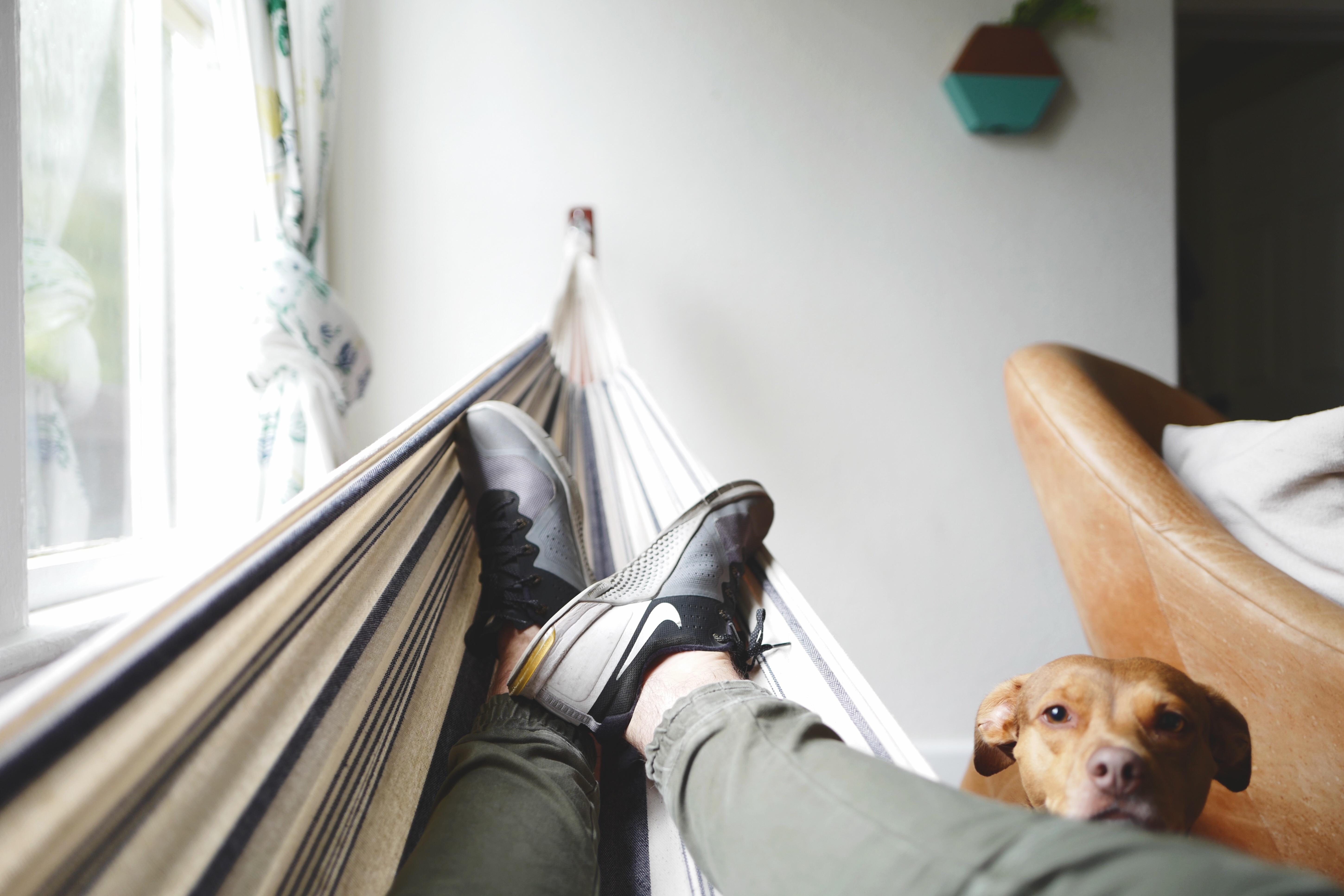 bodenbelag wohnzimmer hund, kostenlose foto : schuh, holz, mädchen, stock, füße, zuhause, Design ideen