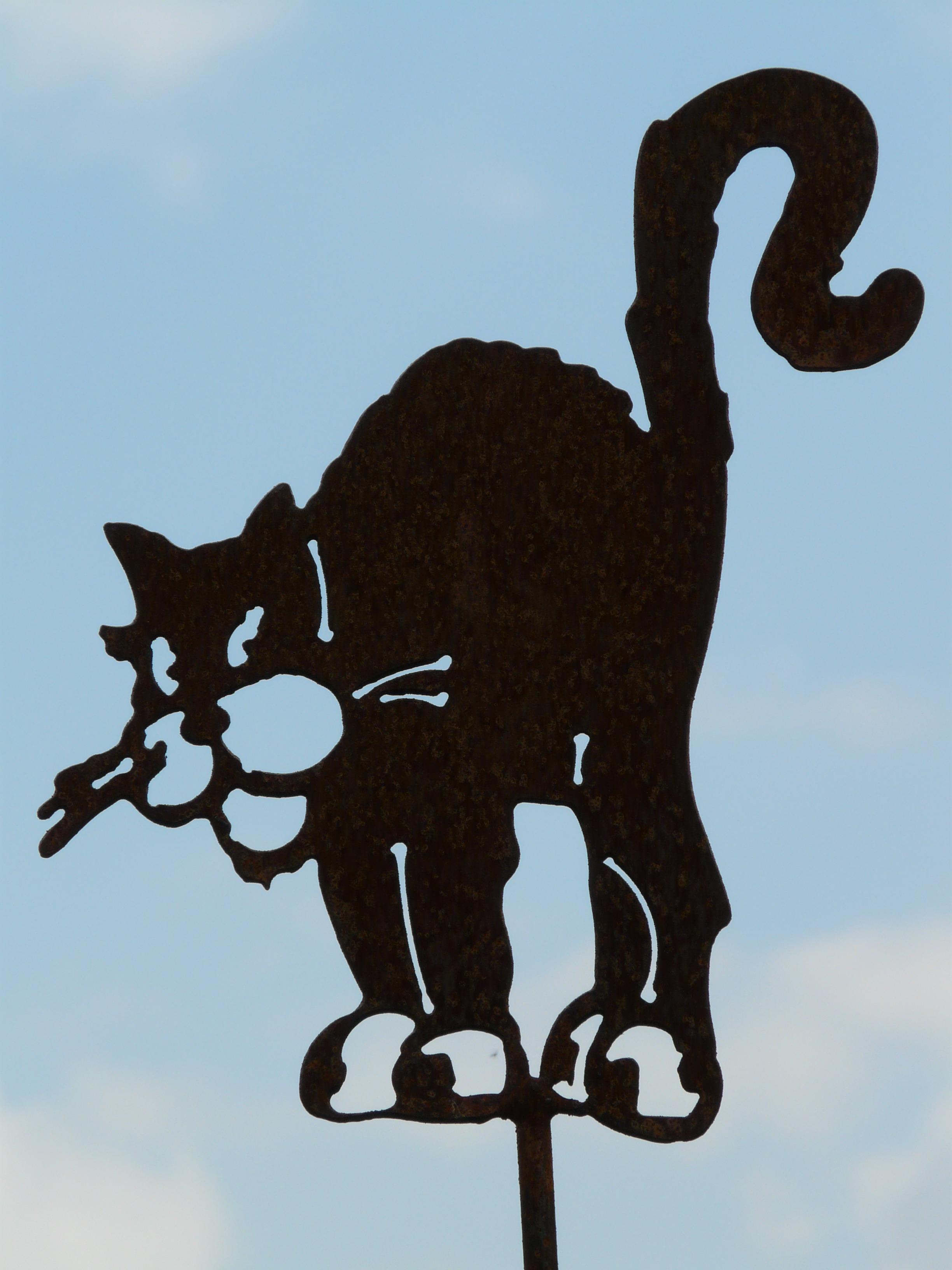 Gambar Bayangan Hitam Hewan Kucing Binatang Menyusui Seni