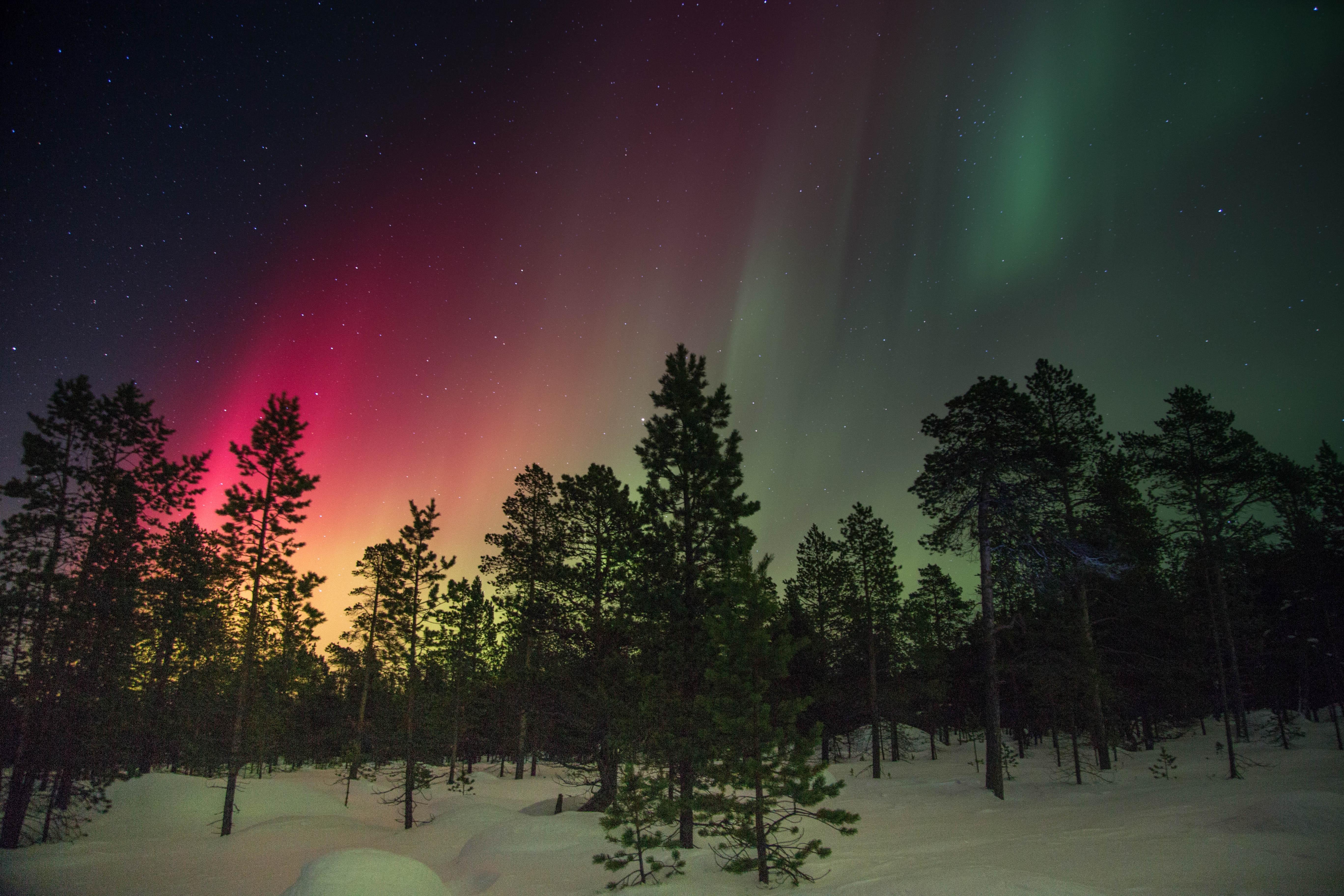 природа северное сияние деревья зима снег дорога nature North lights trees winter snow road бесплатно