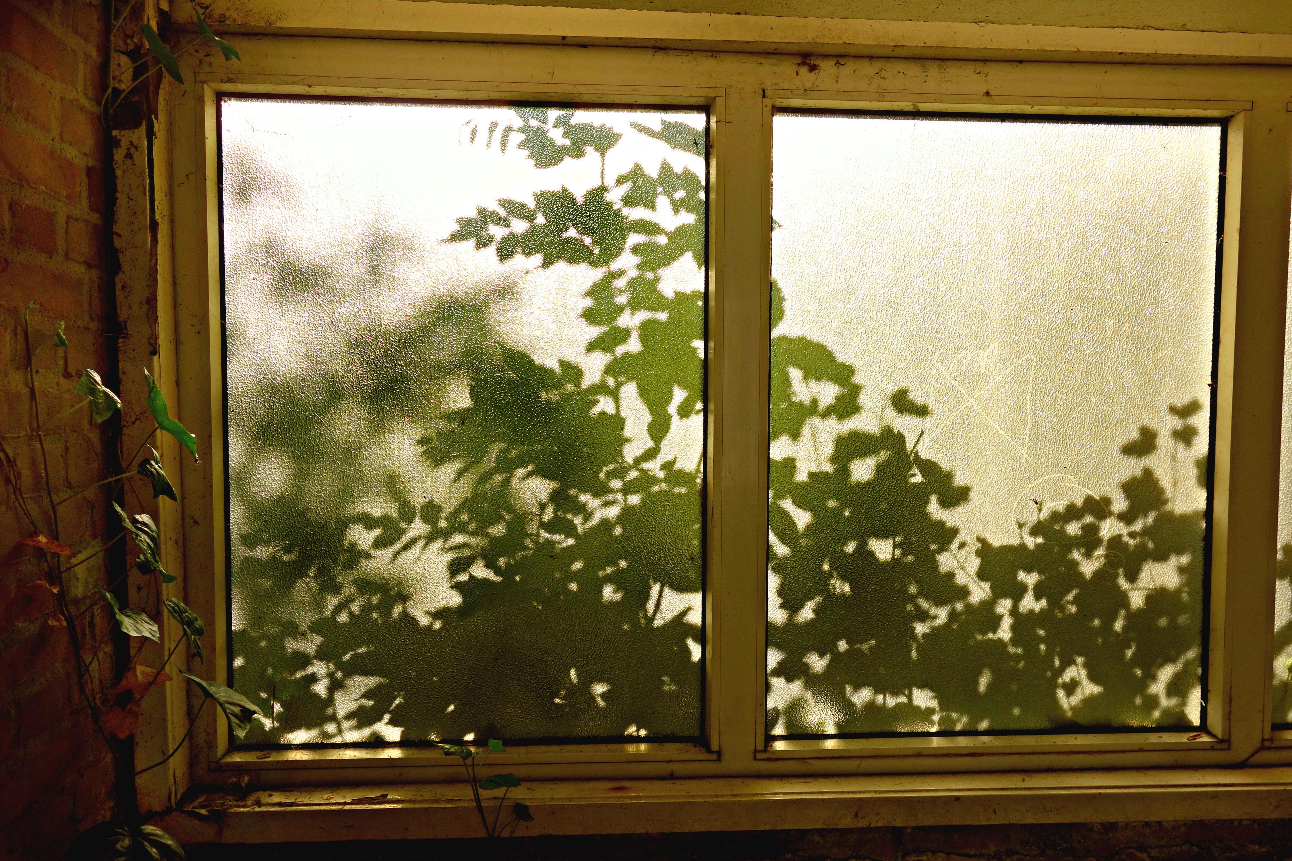 Maison lumière du soleil texture feuille mur modèle vert ombre chambre porte la peinture design dintérieur feuilles brillant cadre vitre